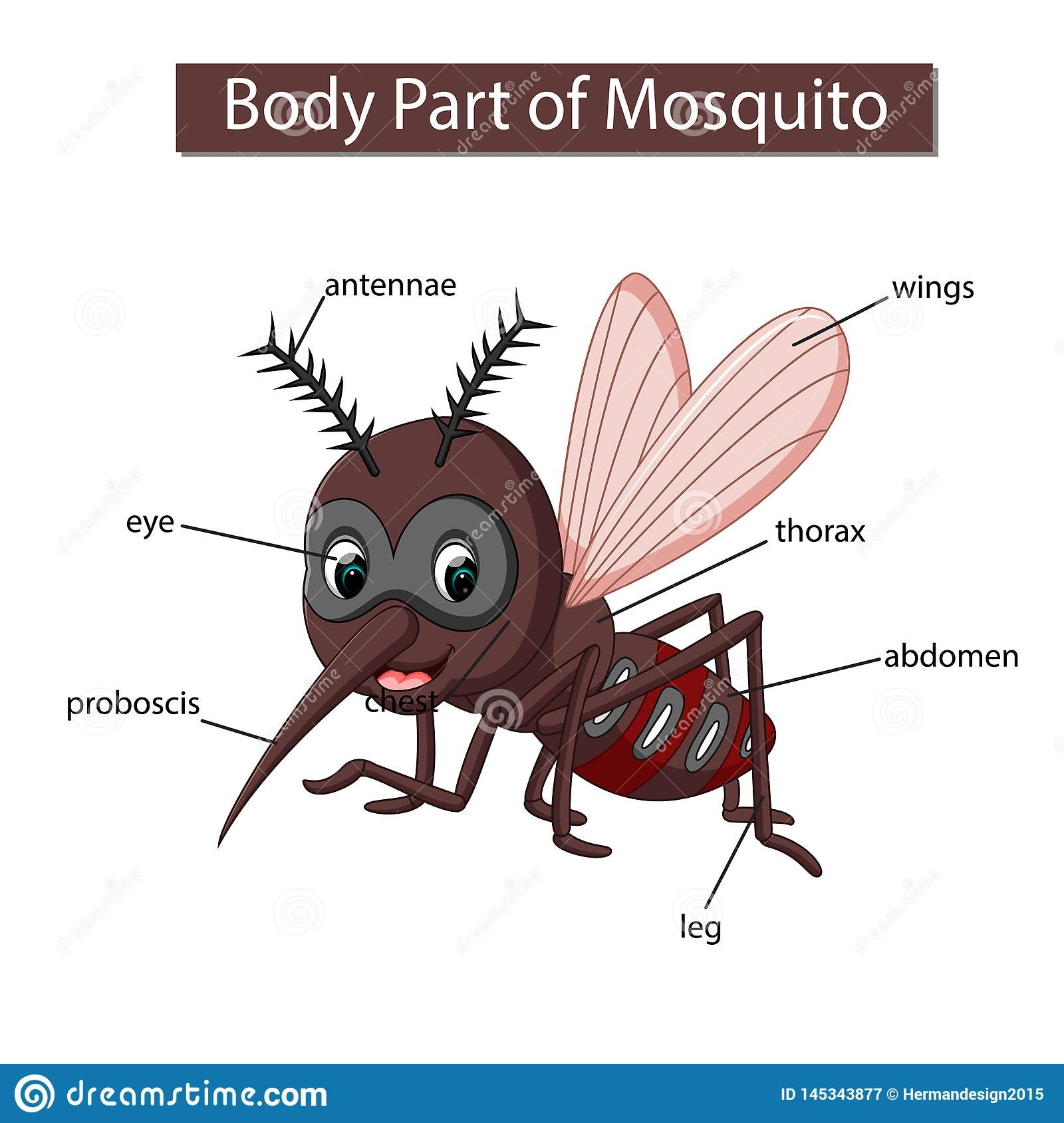 Diagram Showing Body Part Of Mosquito Stock Vector