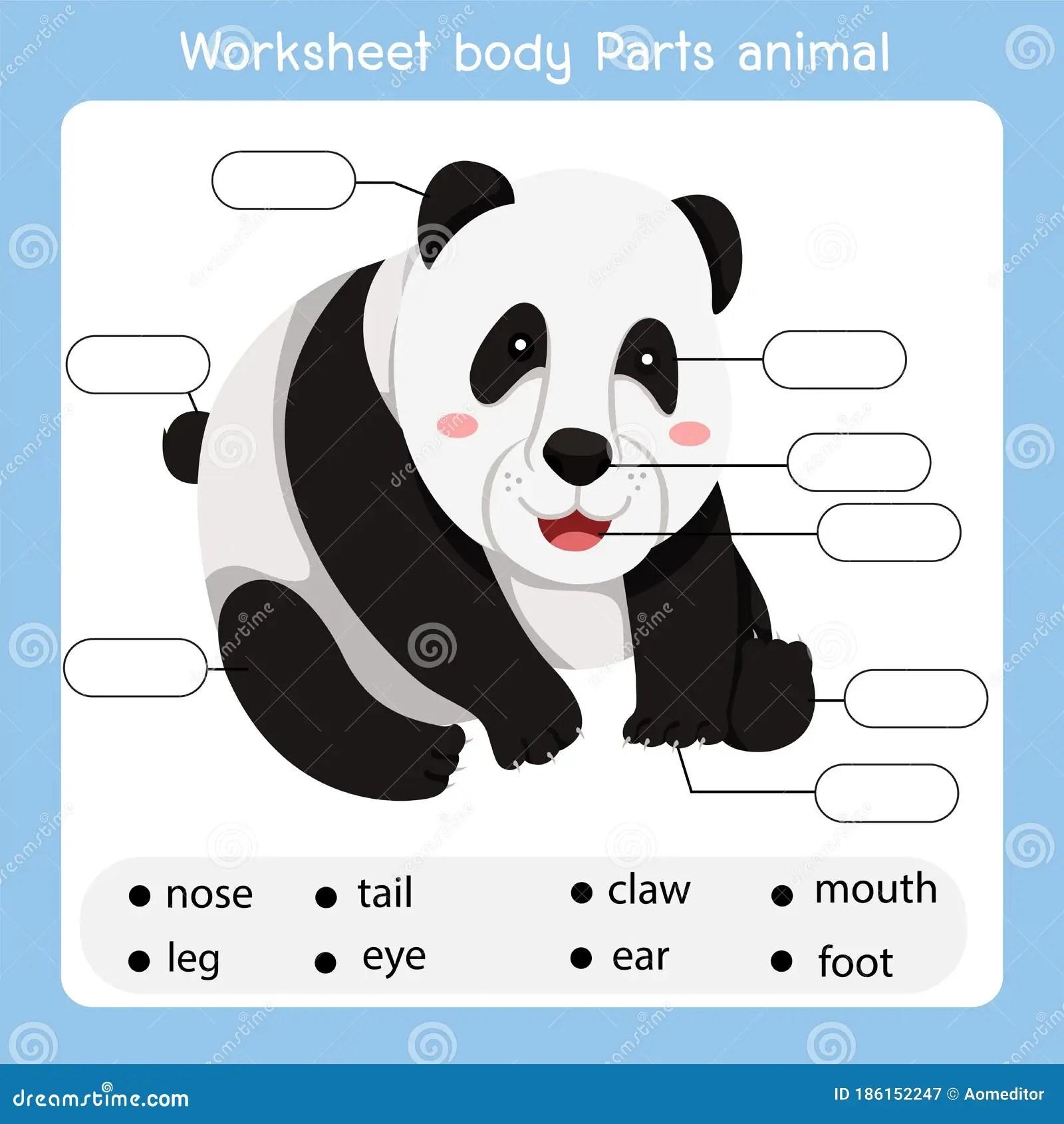 Illustrator Of Worksheet Body Parts Panda Animal Stock