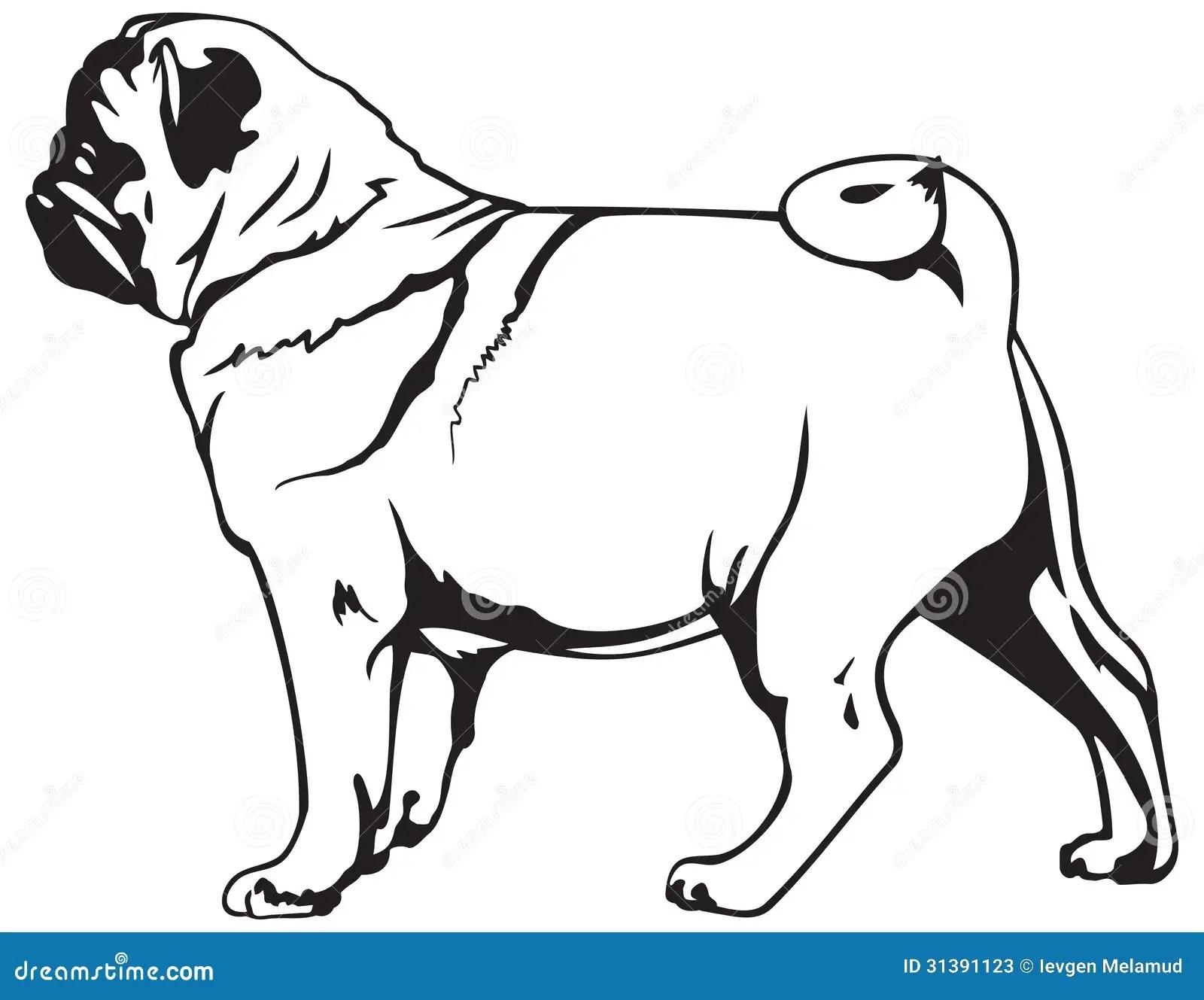 Pug Dog Breed Stock Photos