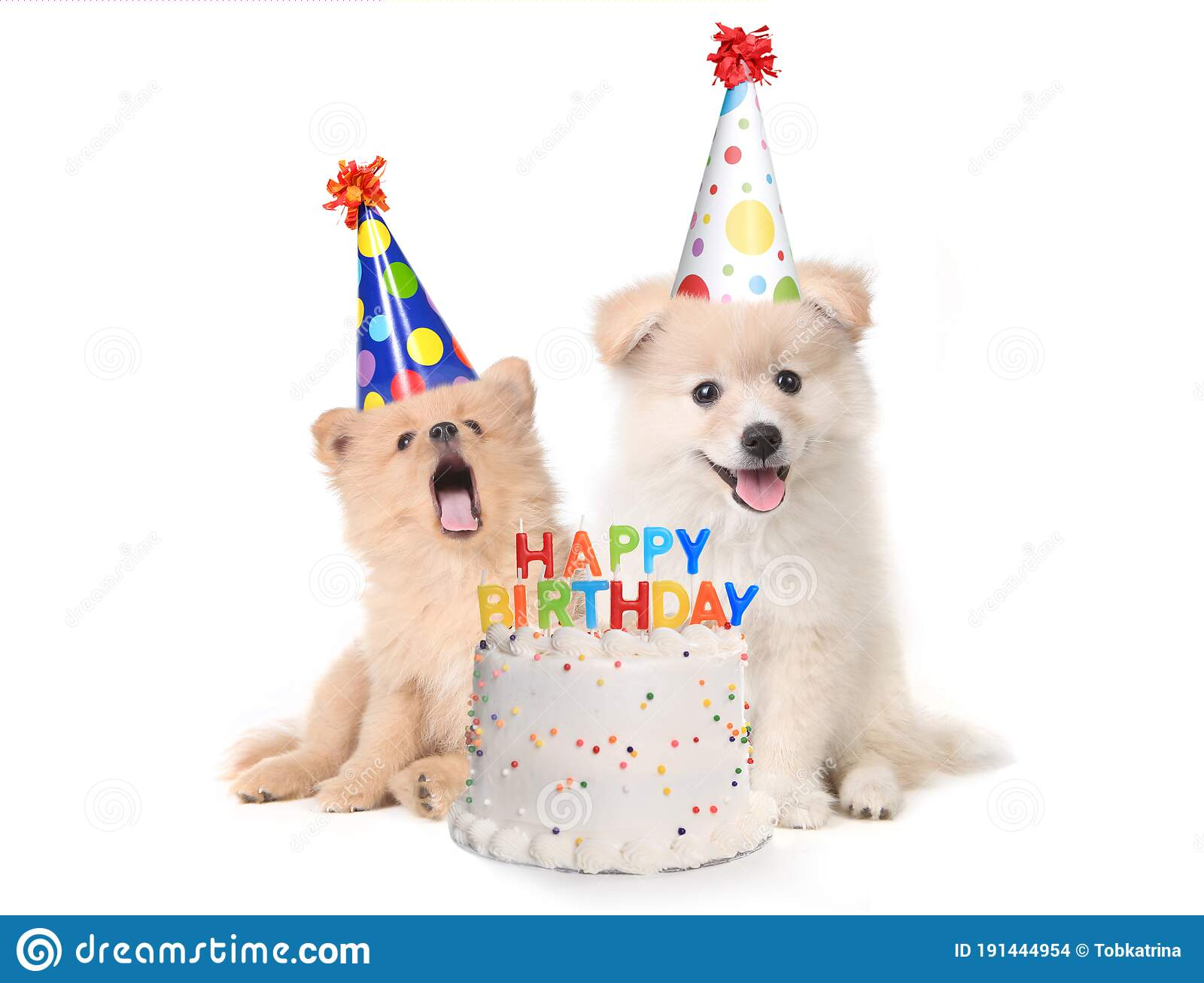 Puppies Singing Happy Birthday Song With Cake Stock Photo Image Of Hound Mammal 191444954