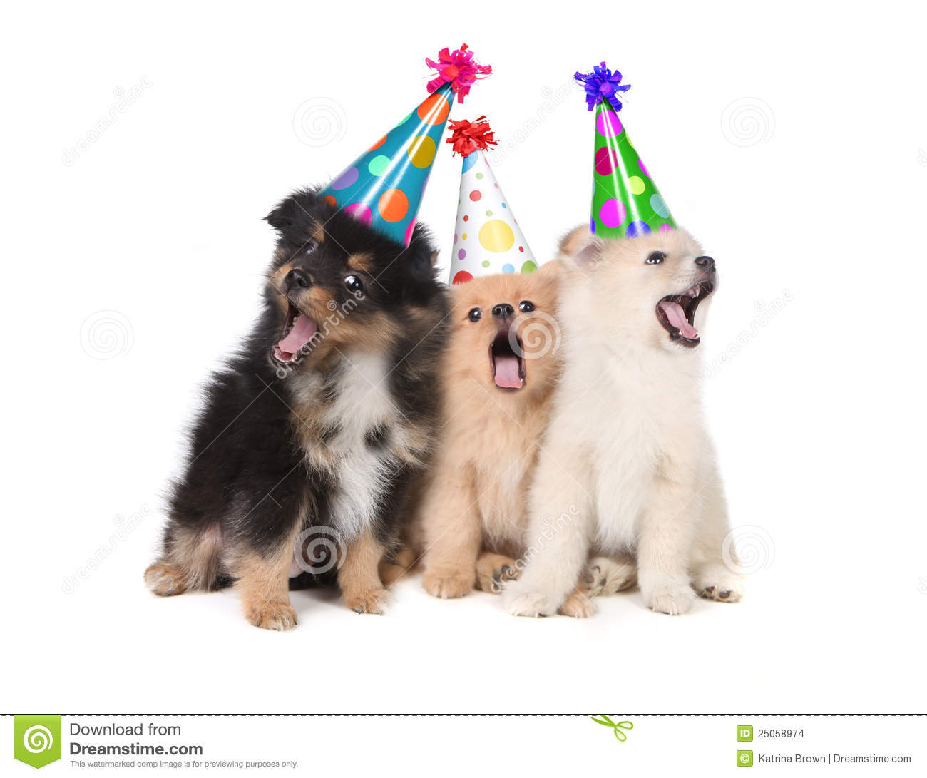 Puppies Singing Happy Birthday Wearing Party Hats Stock Photo Image Of Holiday Mutt 25058974