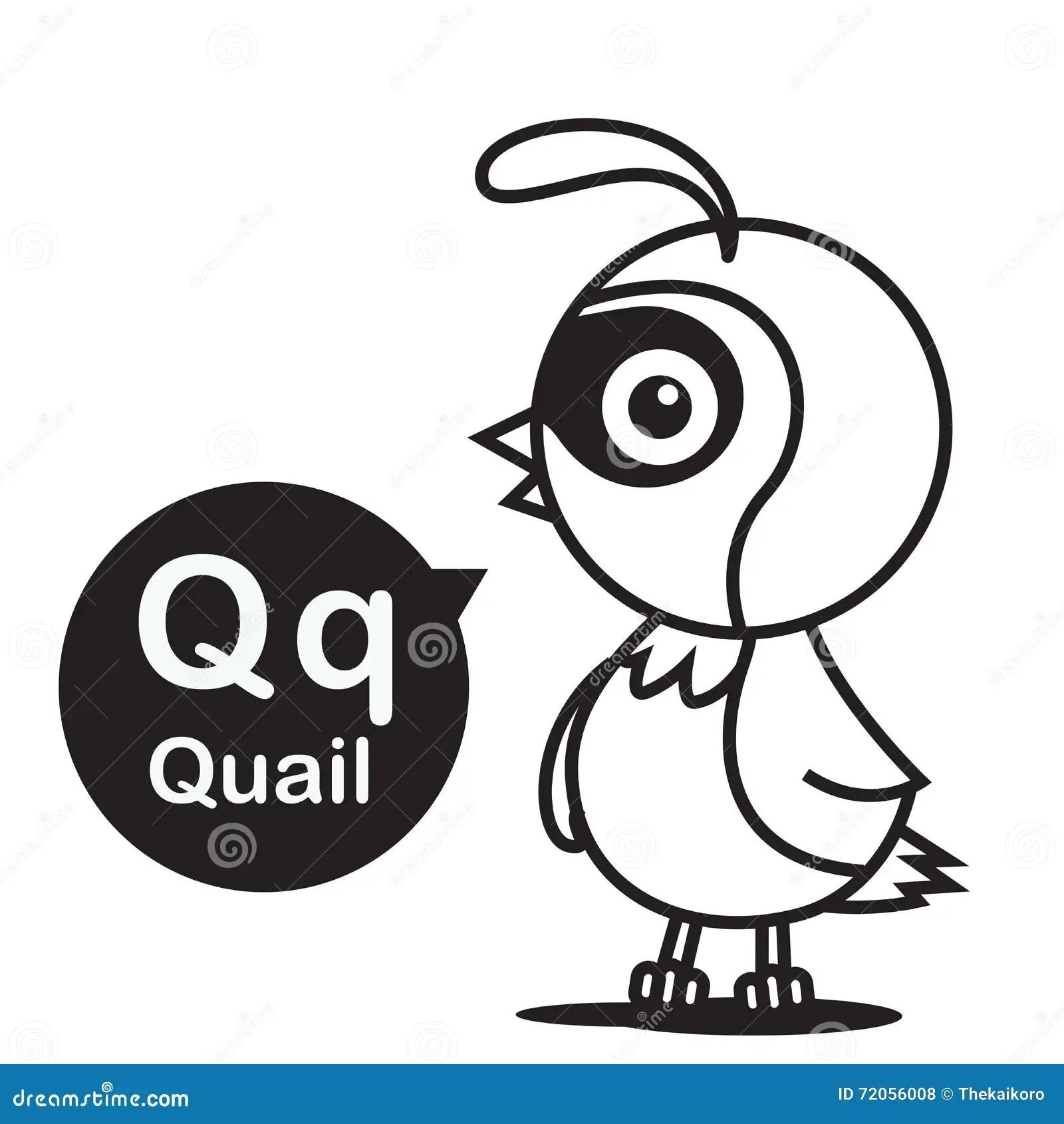Quail Bird Character Vector Cartoon Vector