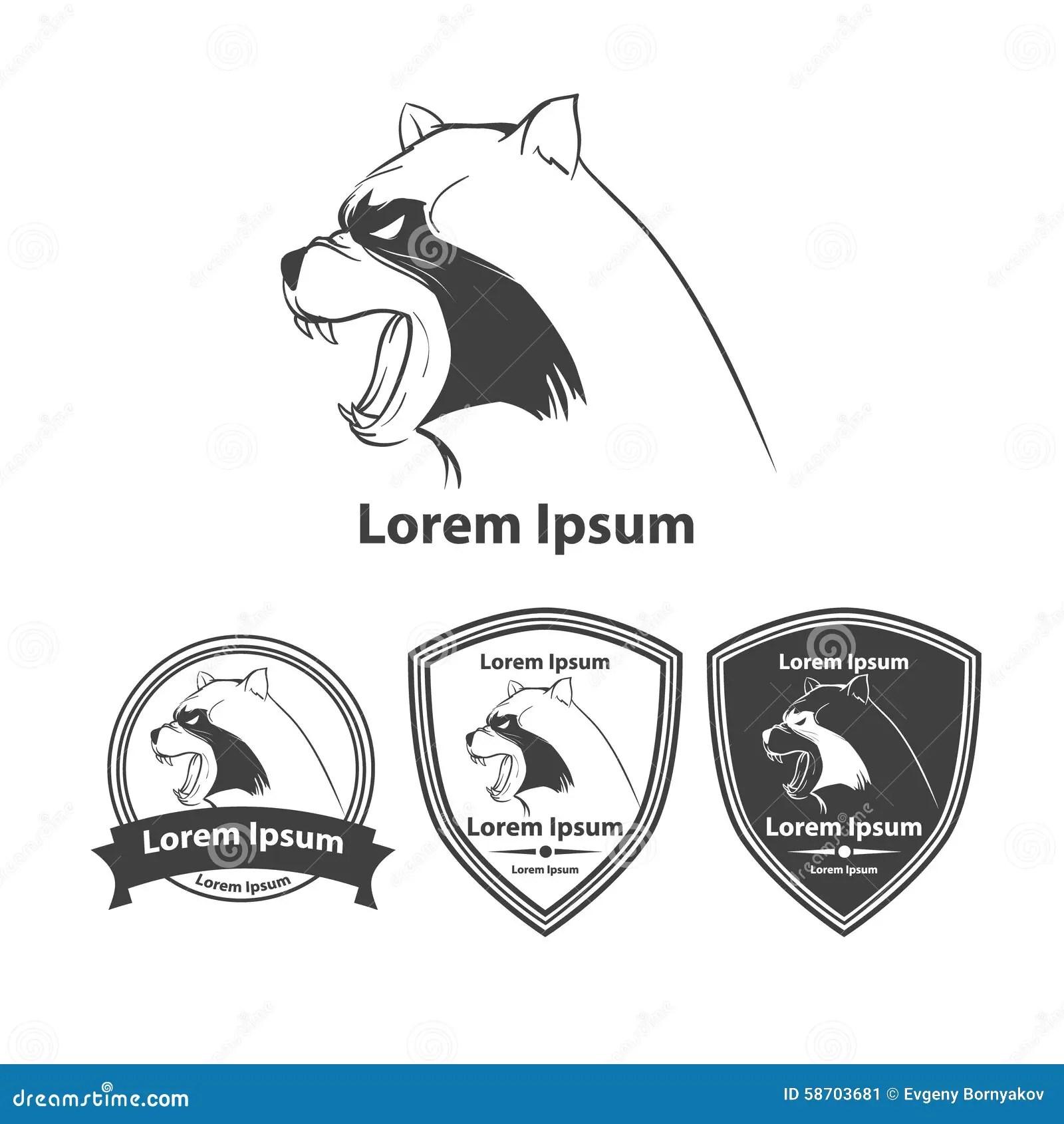 Raccoon Vektor Illustrationer Illustration Av Husdjur