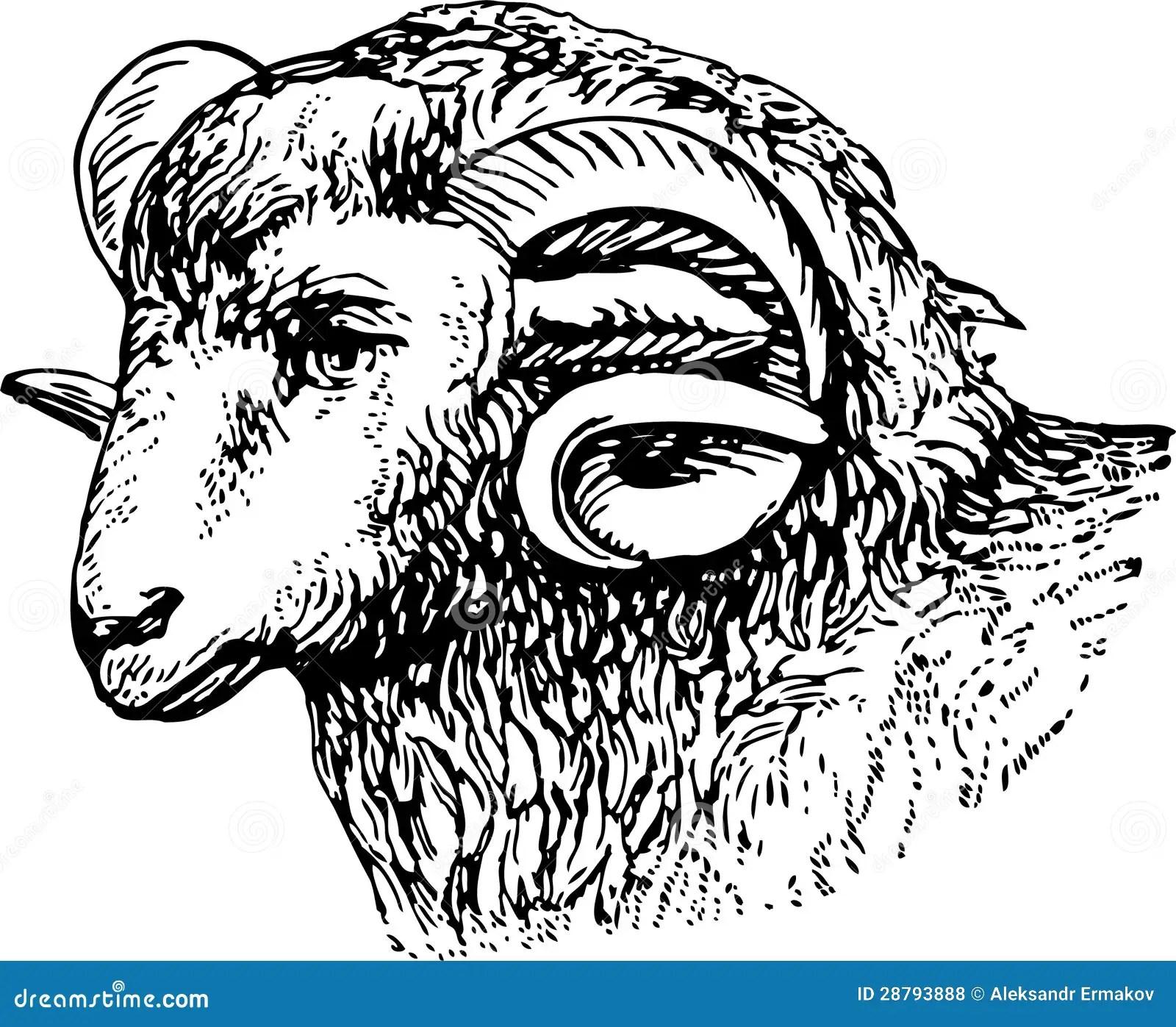 Rams Head Stock Photo Image Of Animal Head Hand