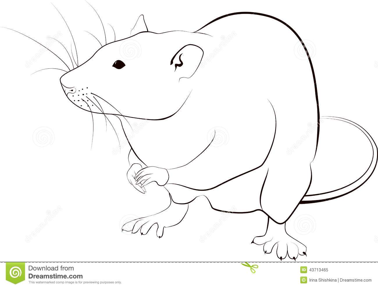Rat Sketch Stock Vector Illustration Of Rodent Clipart