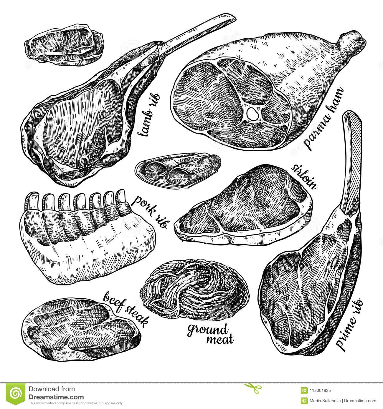 Raw Meat Set Vector Drawing Hand Drawn Beef Steak Pork