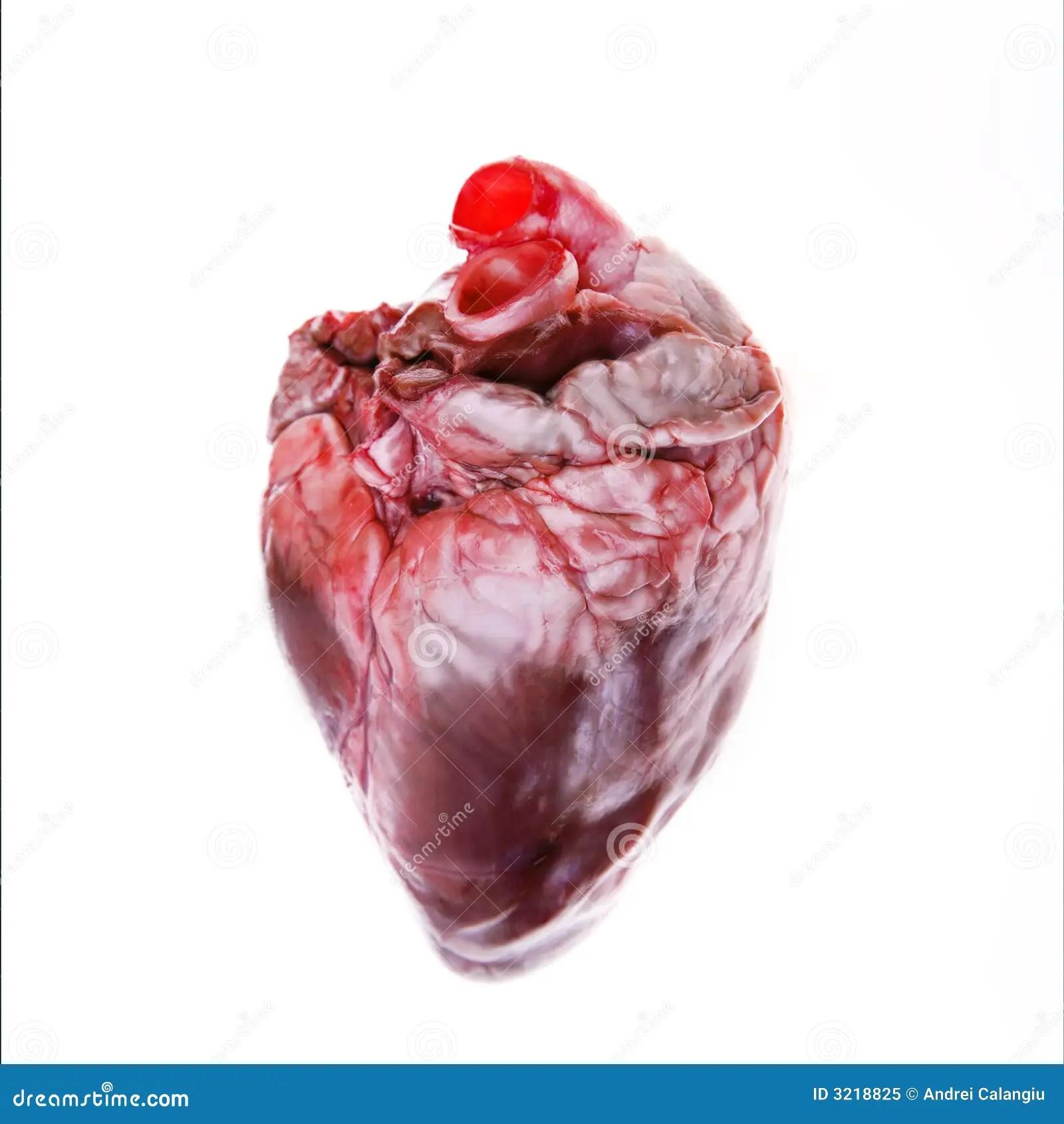 Real Heart Stock Photos