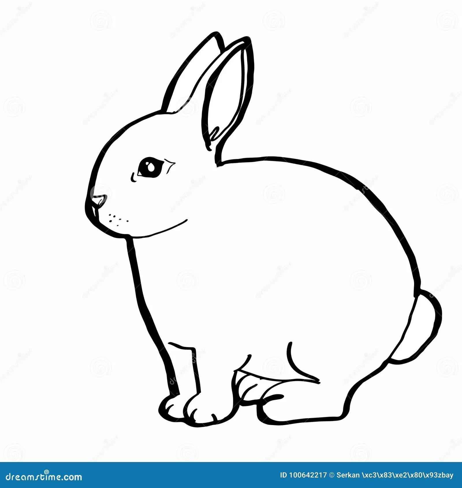 Realistic Rabbit Drawing Stock Vector Illustration Of