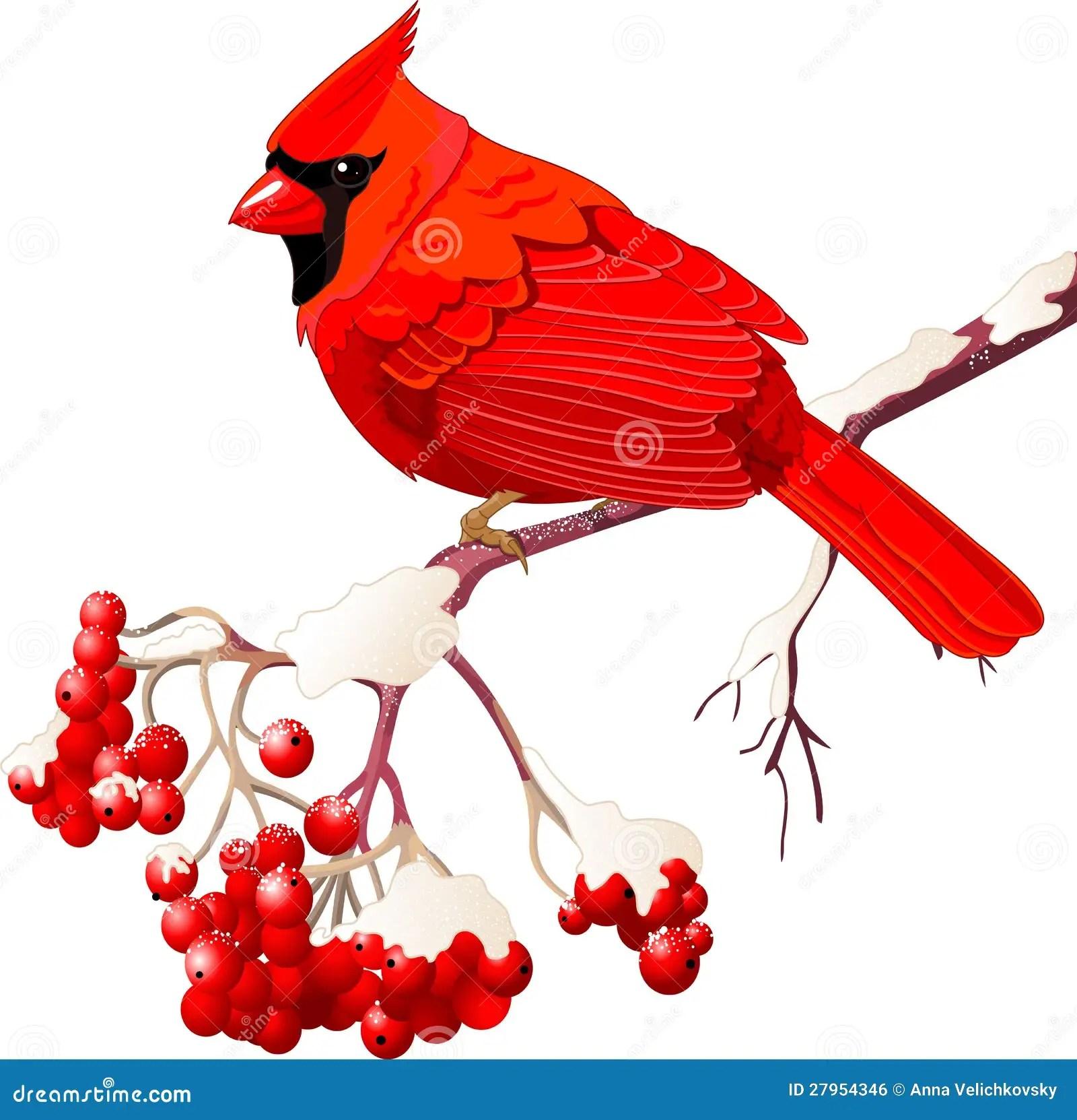 Red Cardinal Bird Stock Vector Illustration Of Sitting