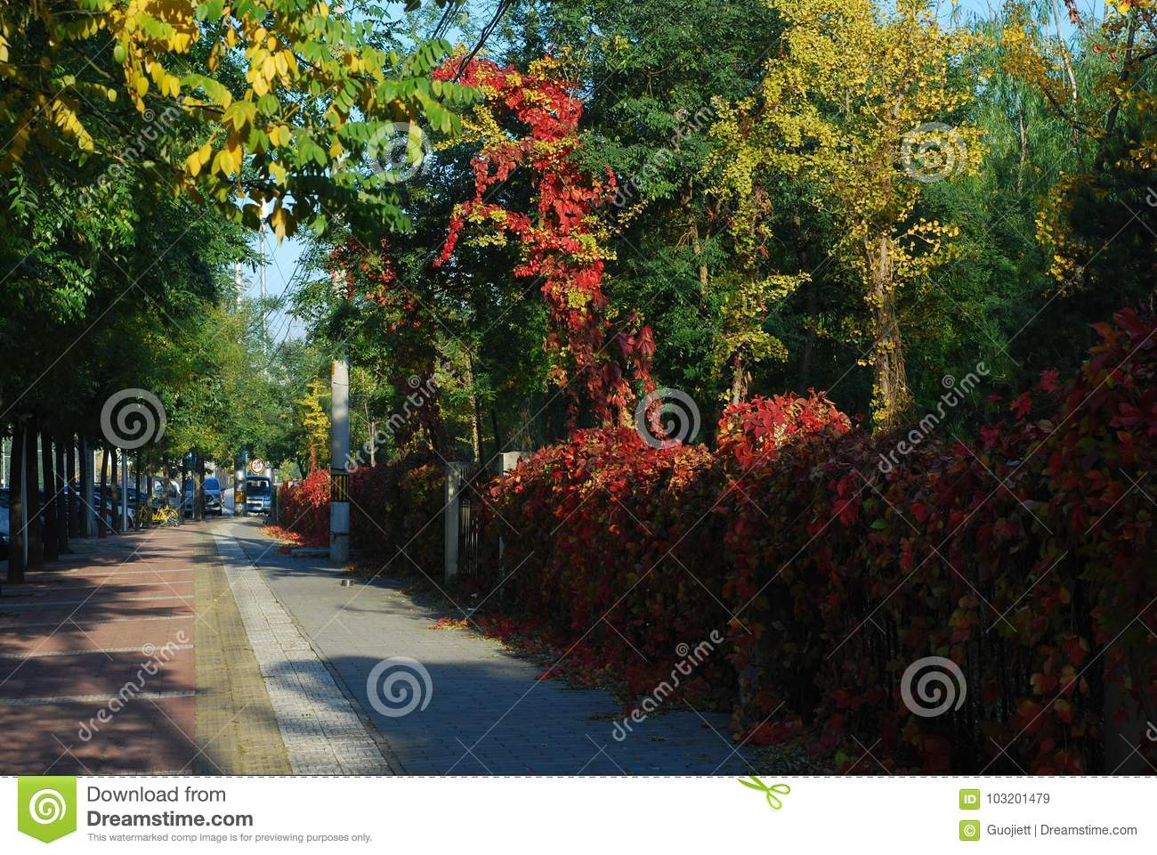 Red Leaf Street Stock Image Image Of Yellow Beginning