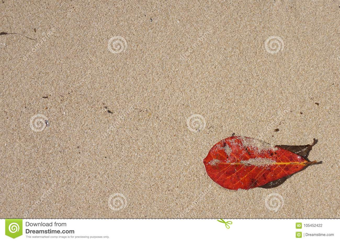 Red Leaf On Yellow Sand Background Summer Pattern Stock