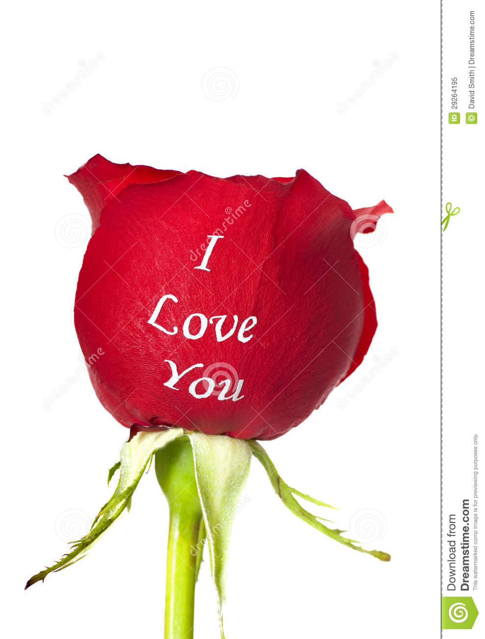 1 536 I Love You Rose Photos Free Royalty Free Stock Photos From Dreamstime