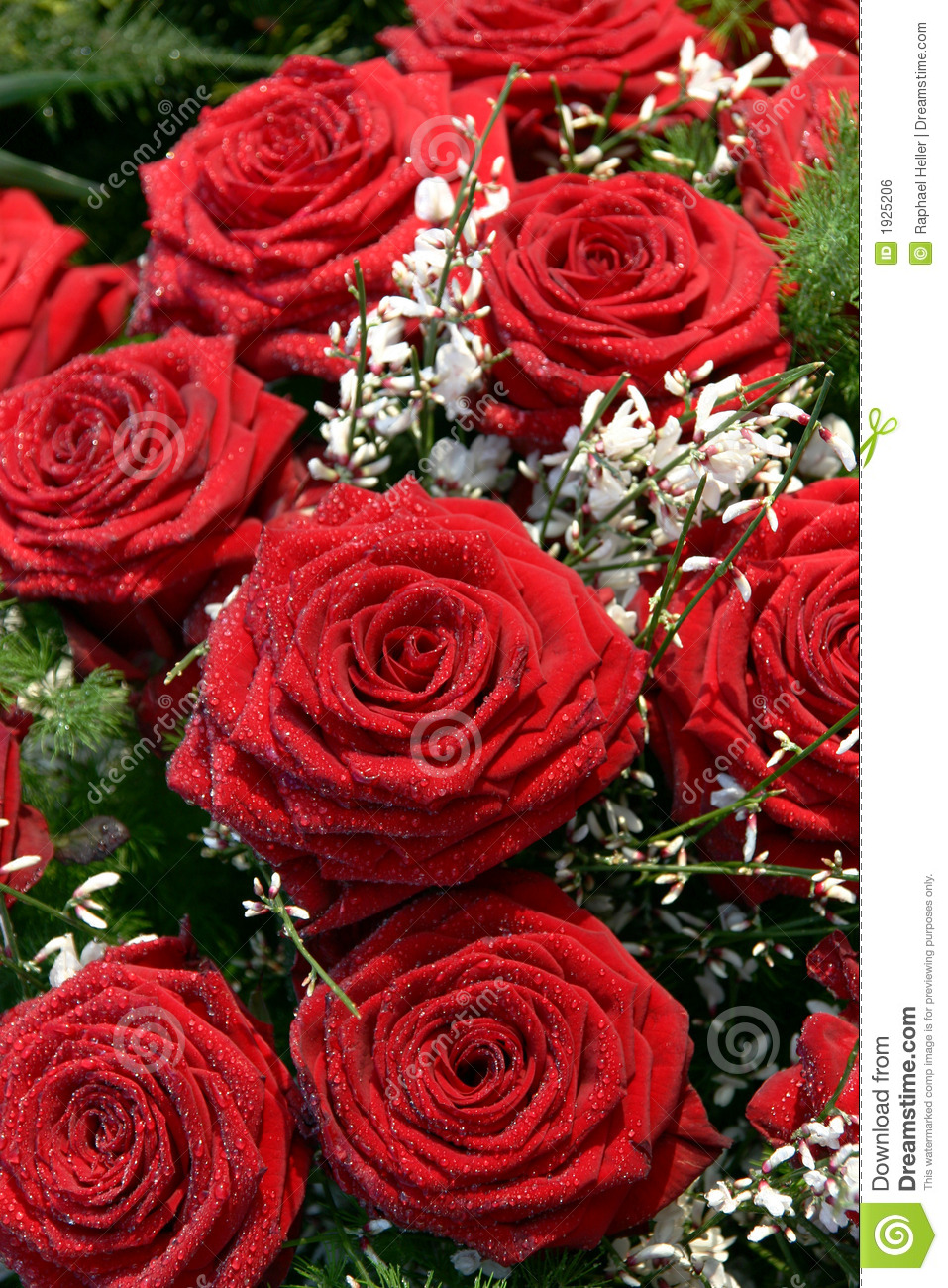 Red Rose With White Flowers Stock Photo 1925206   Megapixl