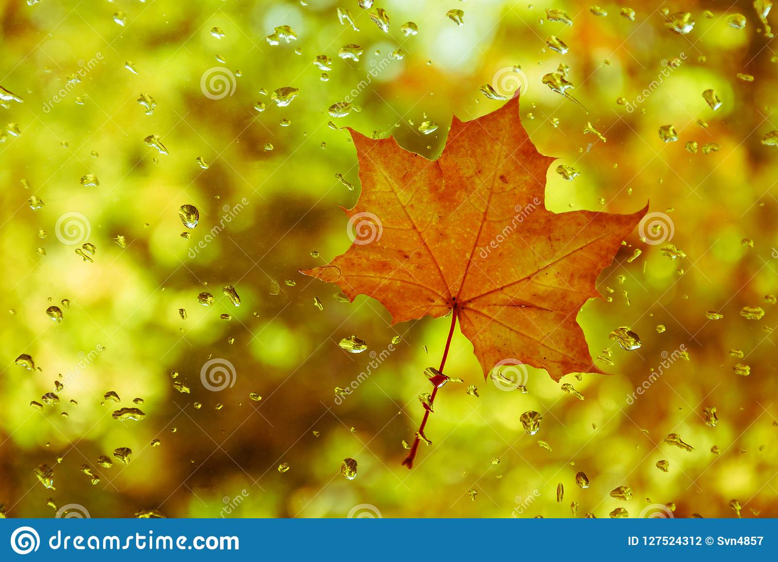 Red Yellow Leaf On The Glass With Water Drops Stock Photo