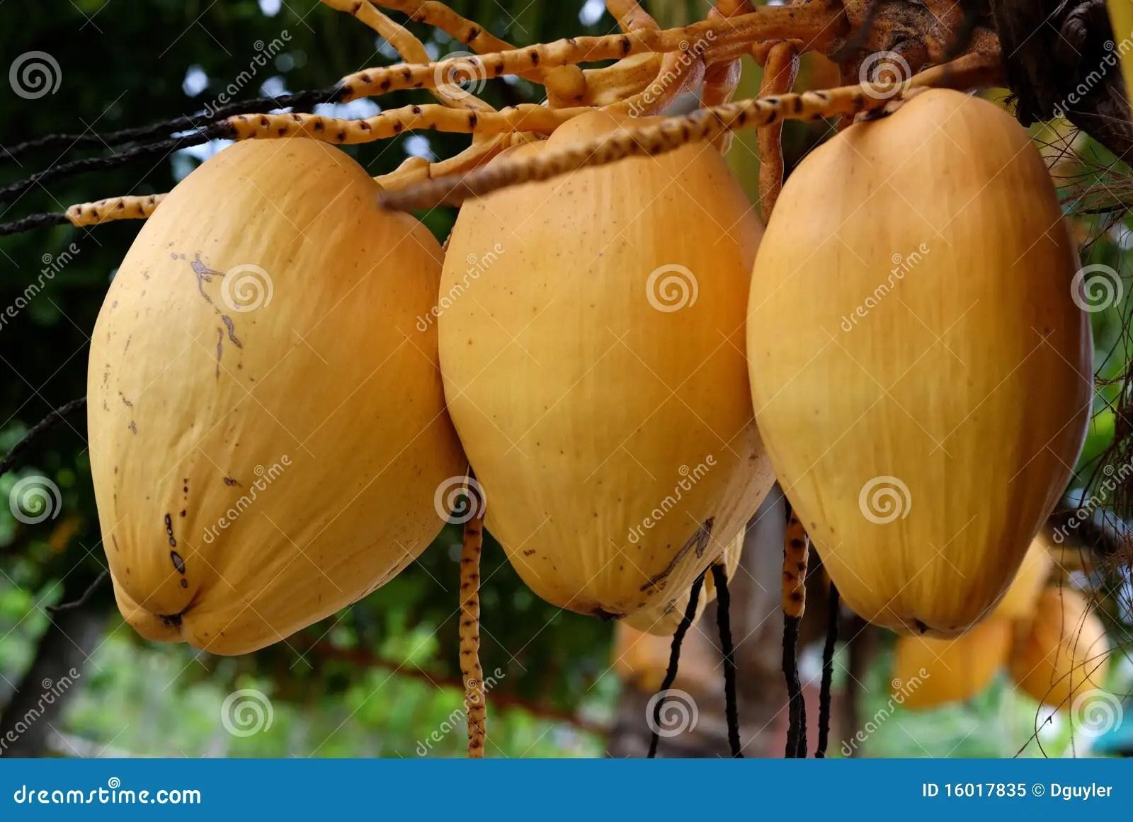 What Fruit Fresh Bunch