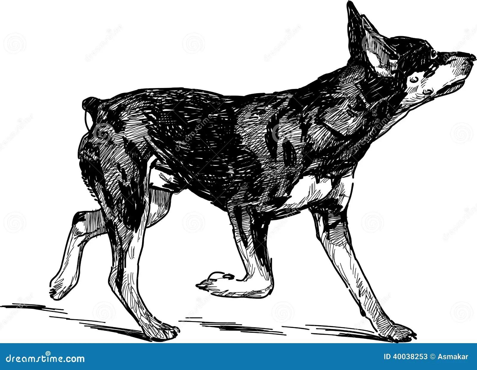 Running Puppy Of Doberman Stock Photo