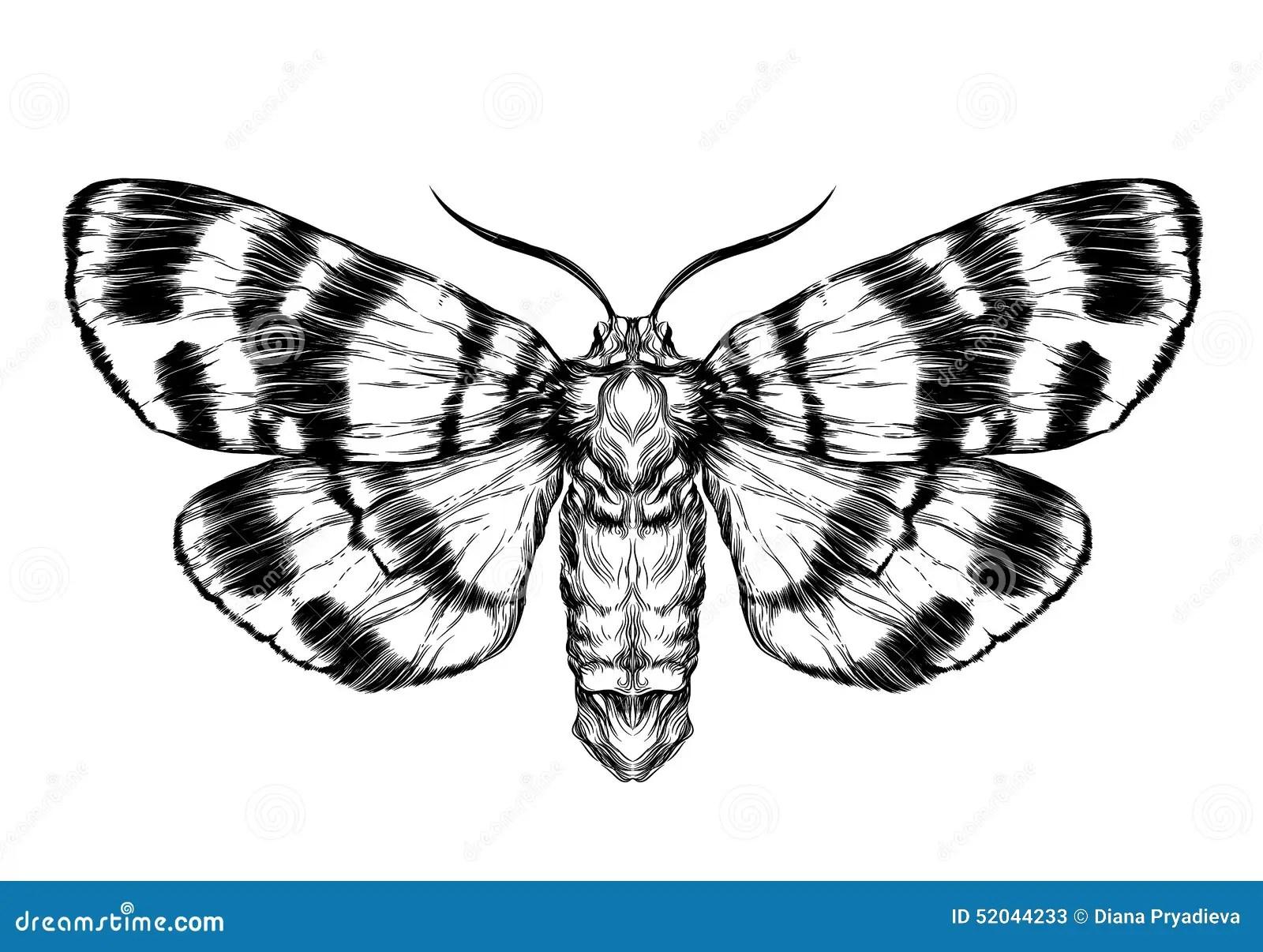 Schizzo Lepidottero Della Farfalla Schizzo Realistico