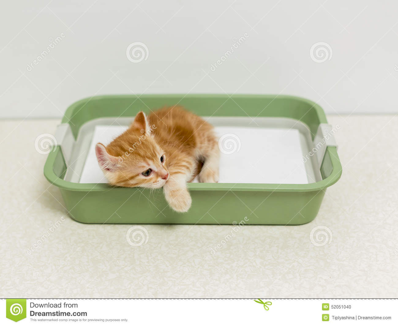 Schooling Kitten To The Toilet Stock Photo