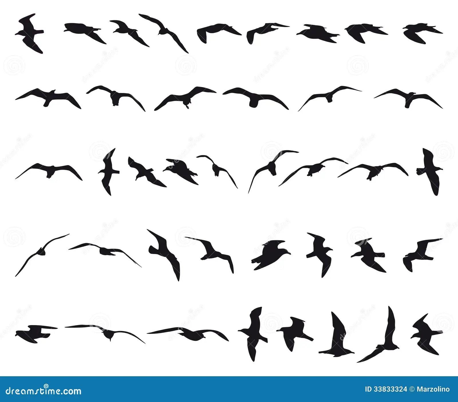Seagulls Stock Vector Illustration Of Wildlife Ocean