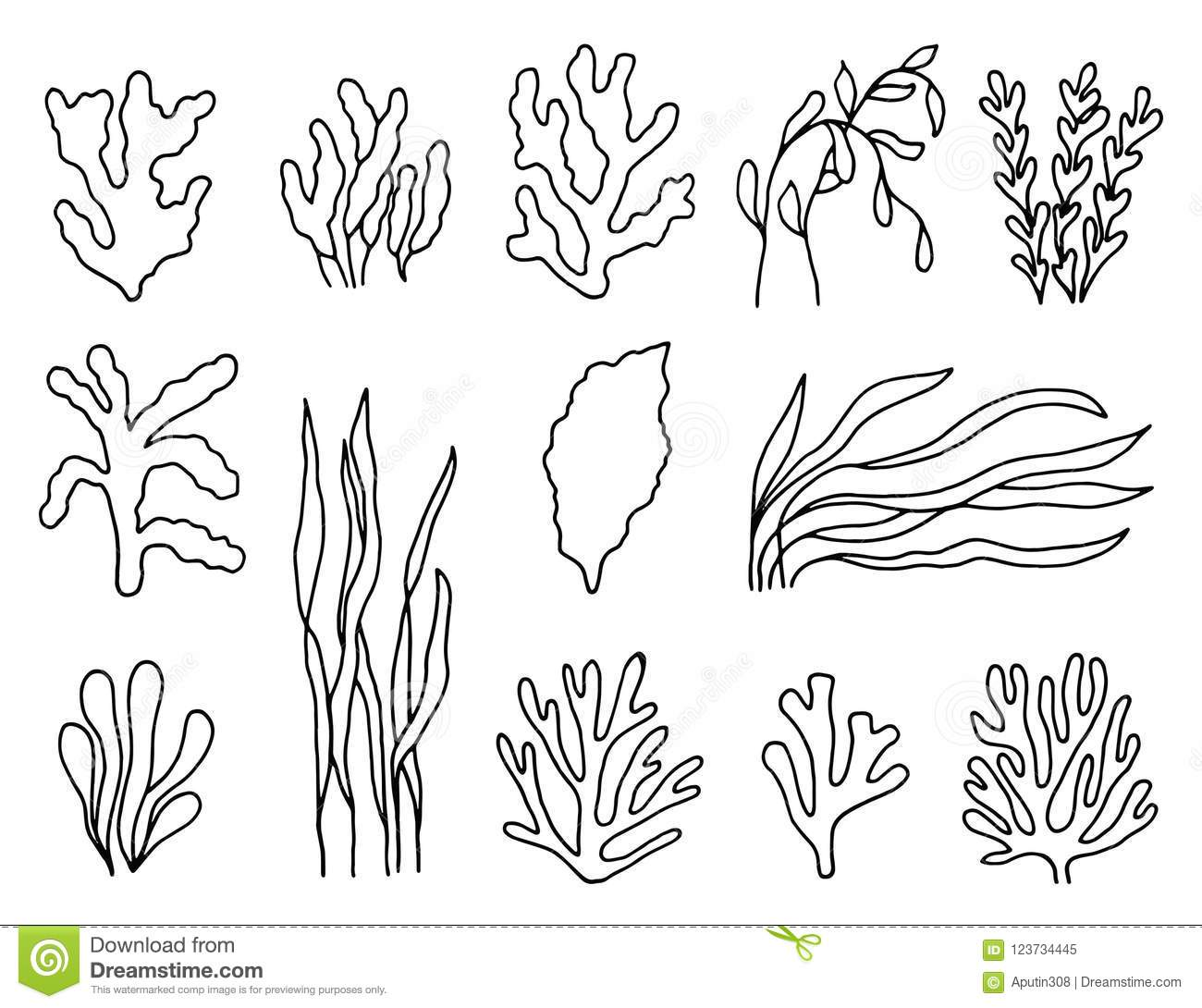 Seaweed Outline In Isolation Linear Drawing A Set Of
