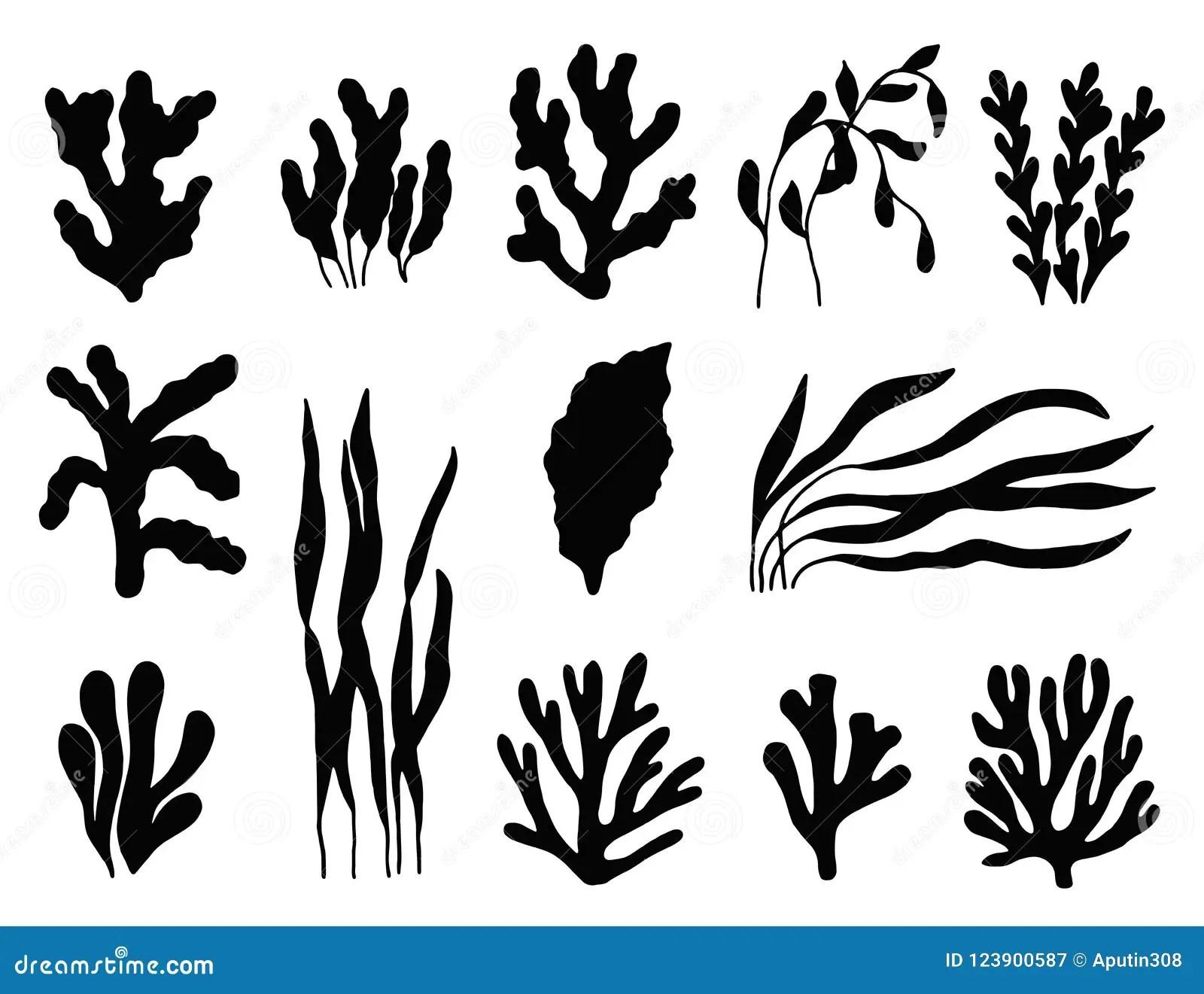 Seaweed Silhouette Isolated Marine Plants On White