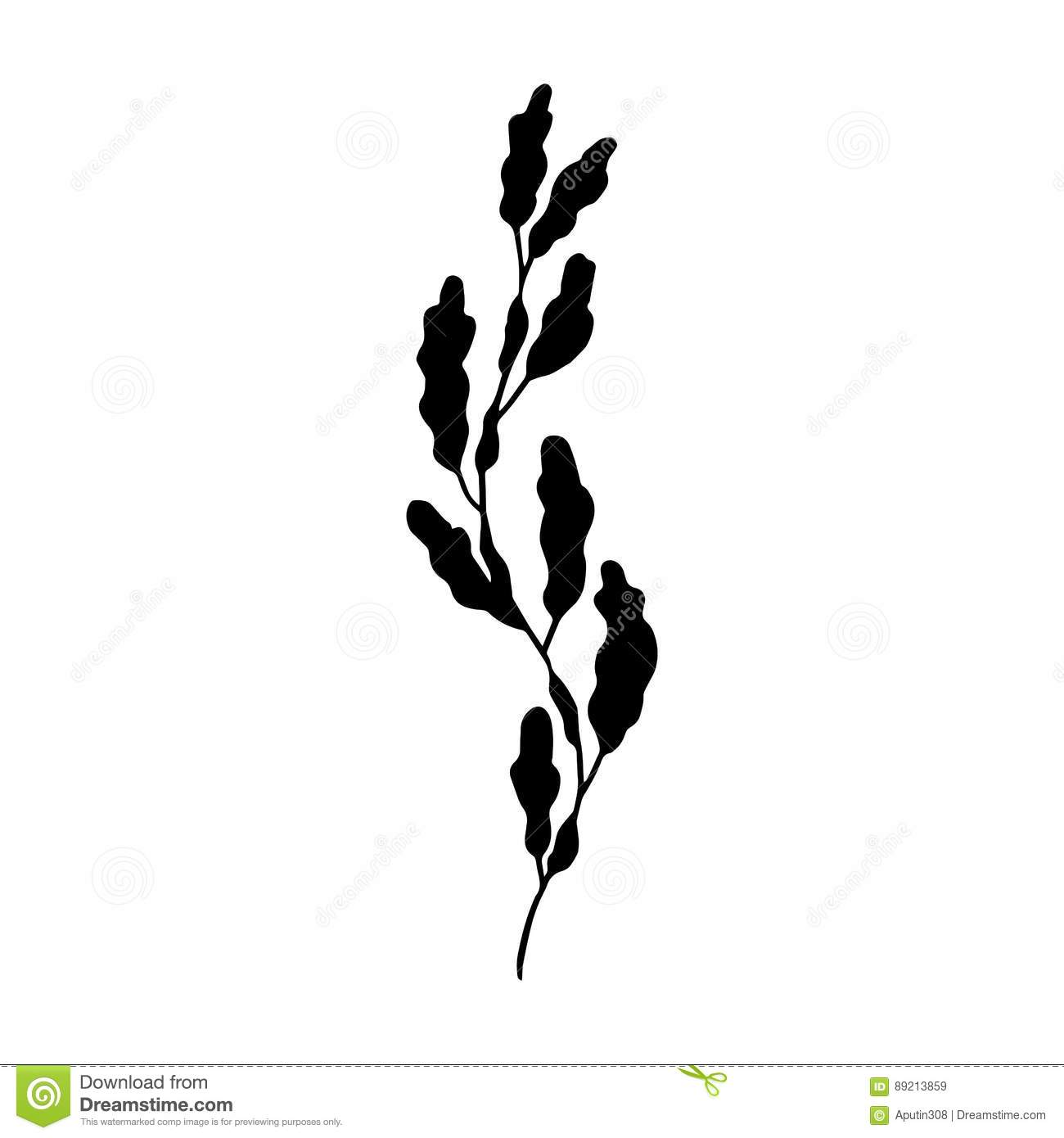 Seaweed Vector Stock Vector Illustration Of Abstract