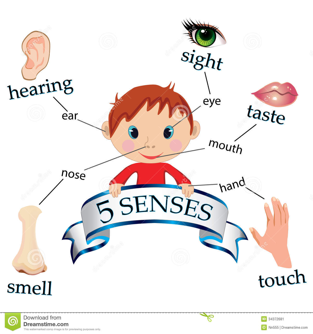 5 Senses Stock Vector Illustration Of Cartoon Preschool