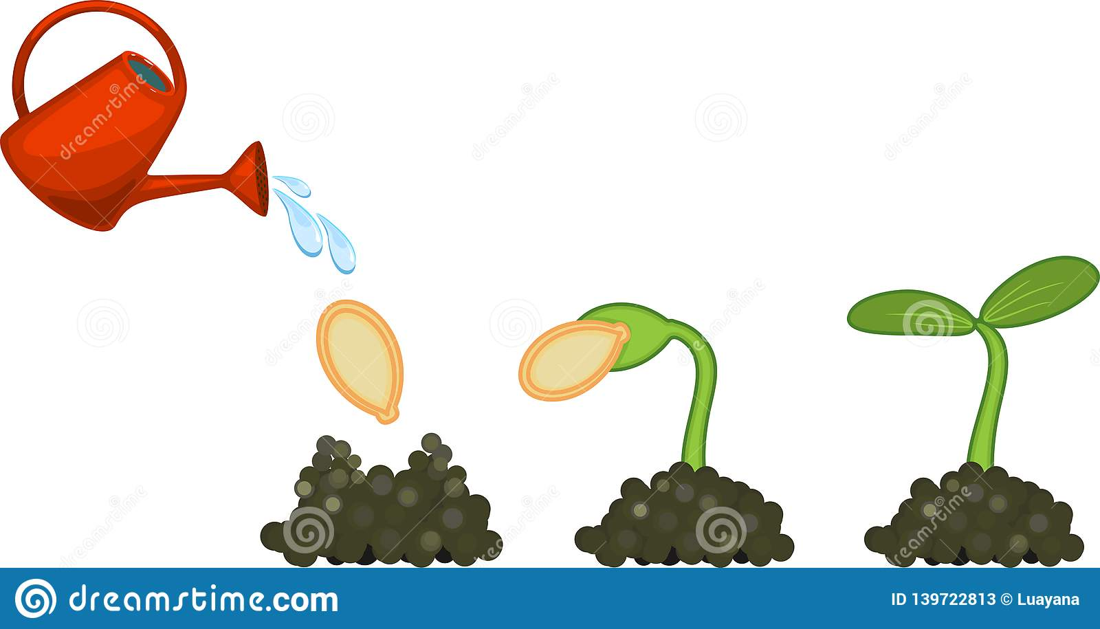 Sequential Stages Of Pumpkin Seed Germination Stock Vector