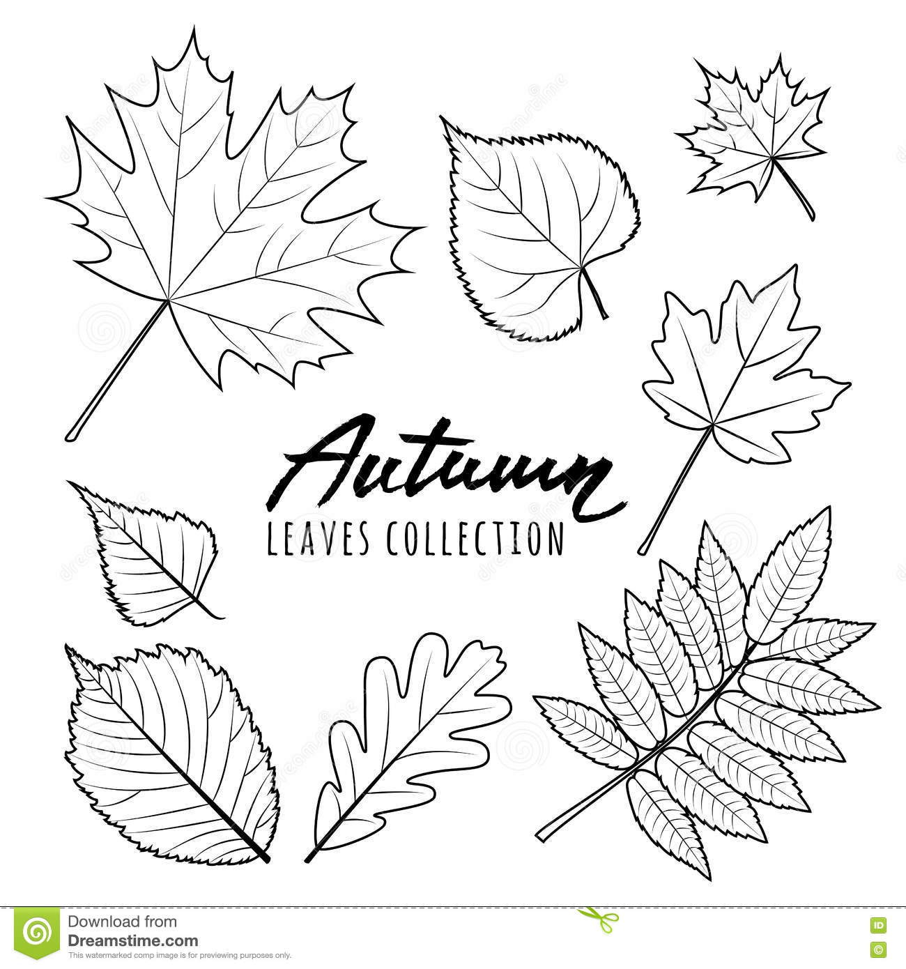 Set Of Autumn Leaves Black And White Outline Hand Drawn
