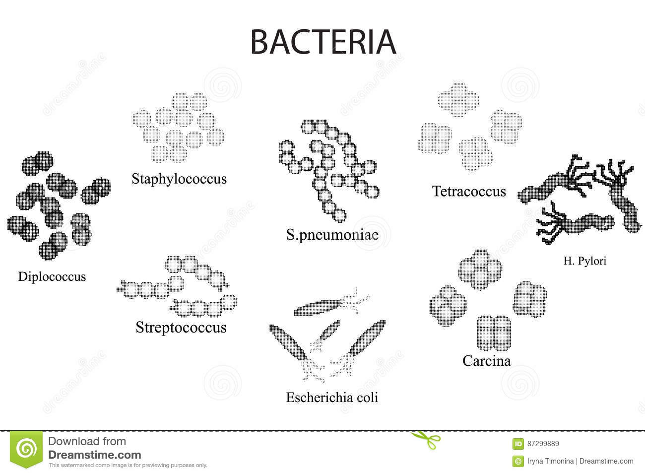 Set Of Bacteria Black And White Staphylococcus