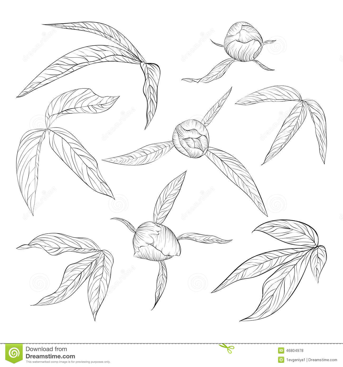 Set Of Beautiful Black And White Peony Leaves And Buds
