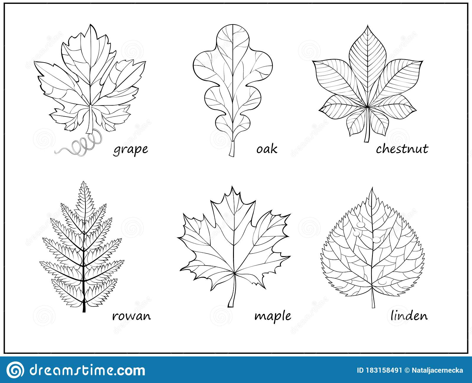 Set Of Black And White Illustrations With Different Leaves