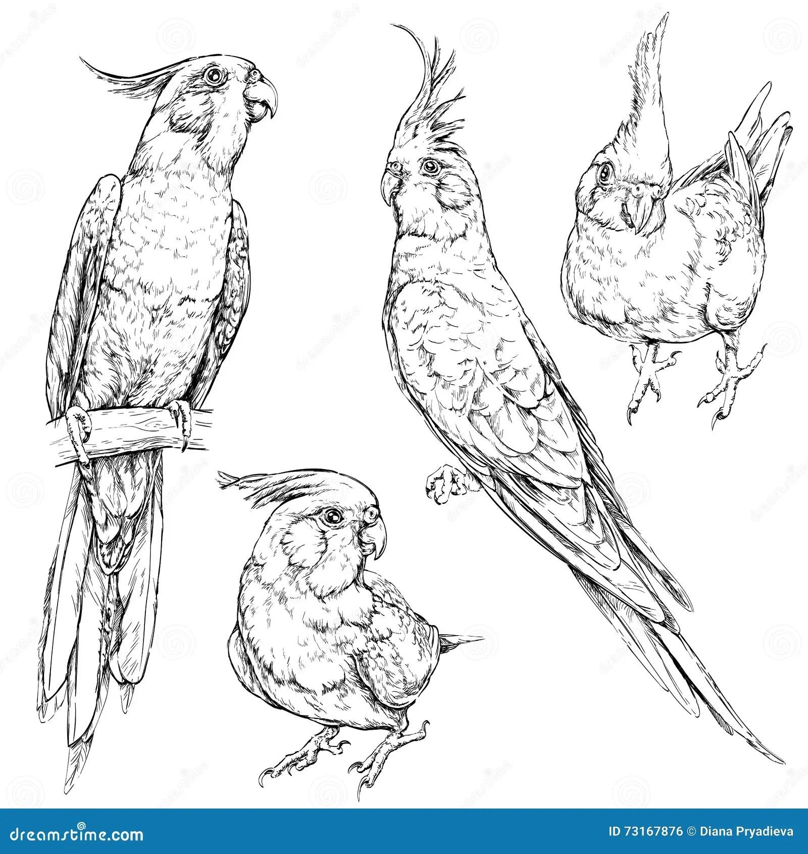 Set Of Cute Funny Cockatiel Parrots Stock Vector