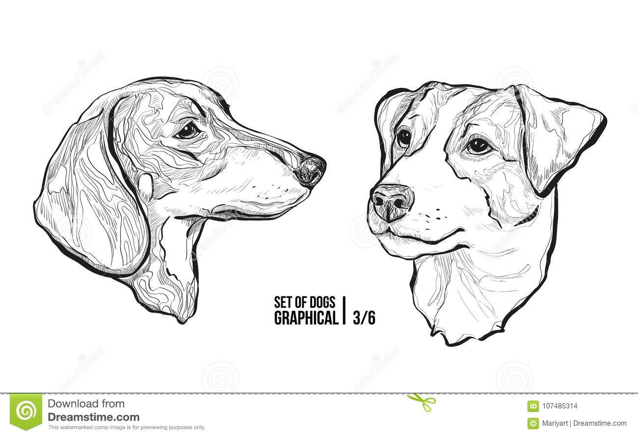 Set Of Dogs Breeds Dachshund And Jack Russell Terrier
