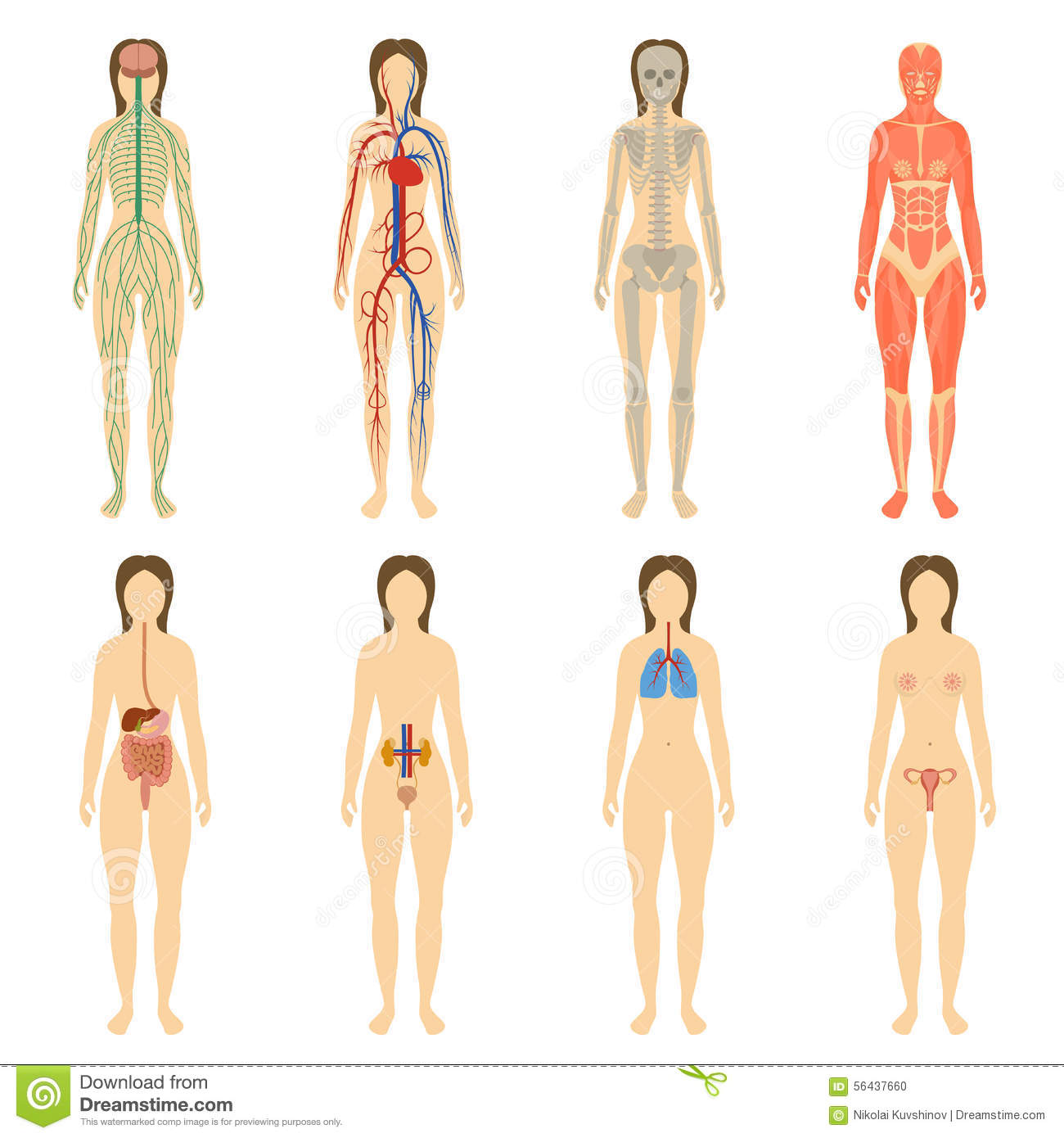 Set Of Human Organs And Systems Of The Body Stock Vector