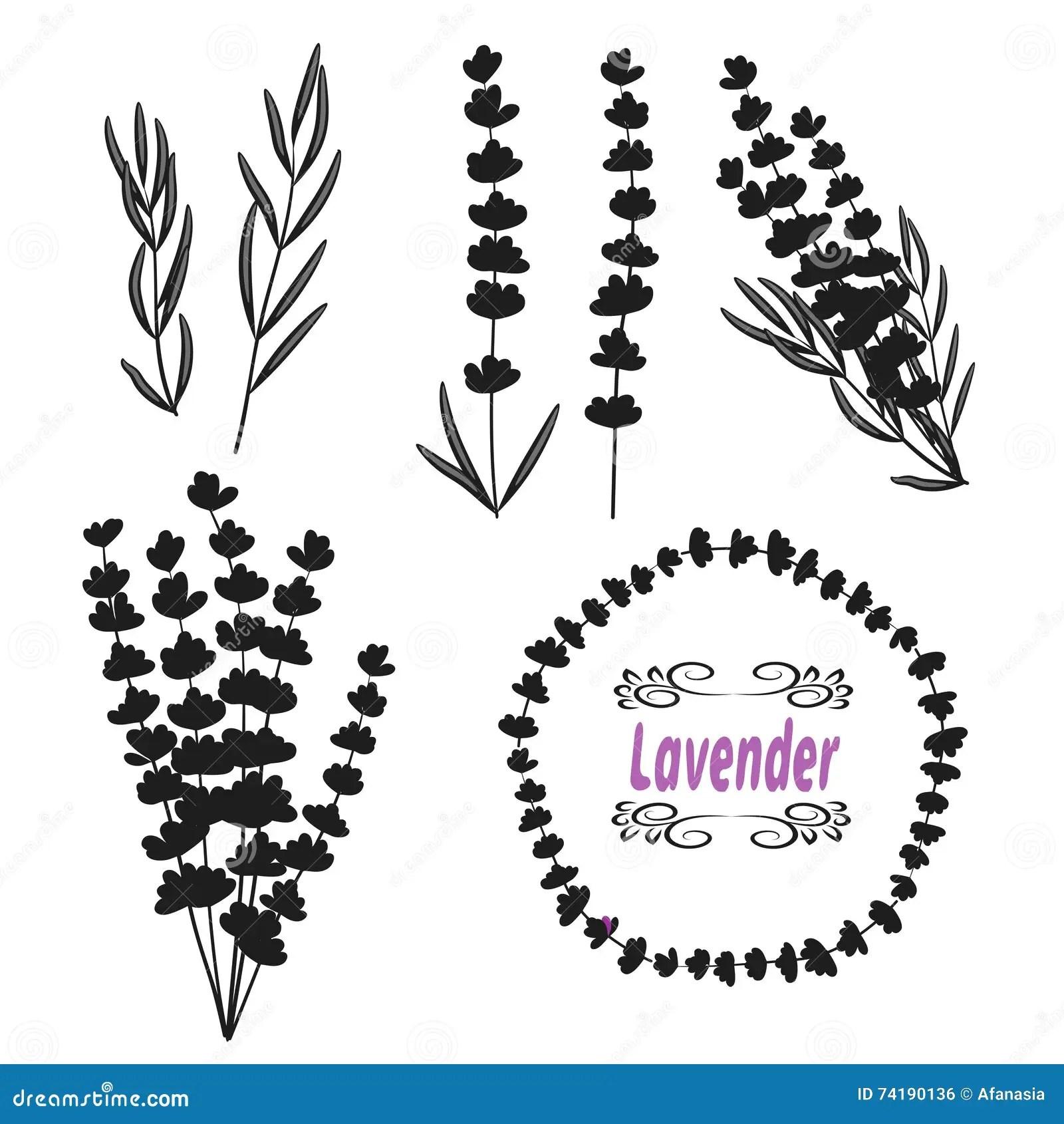 Set Of Lavender Hand Drawn Bunch Of Lavender Lavender