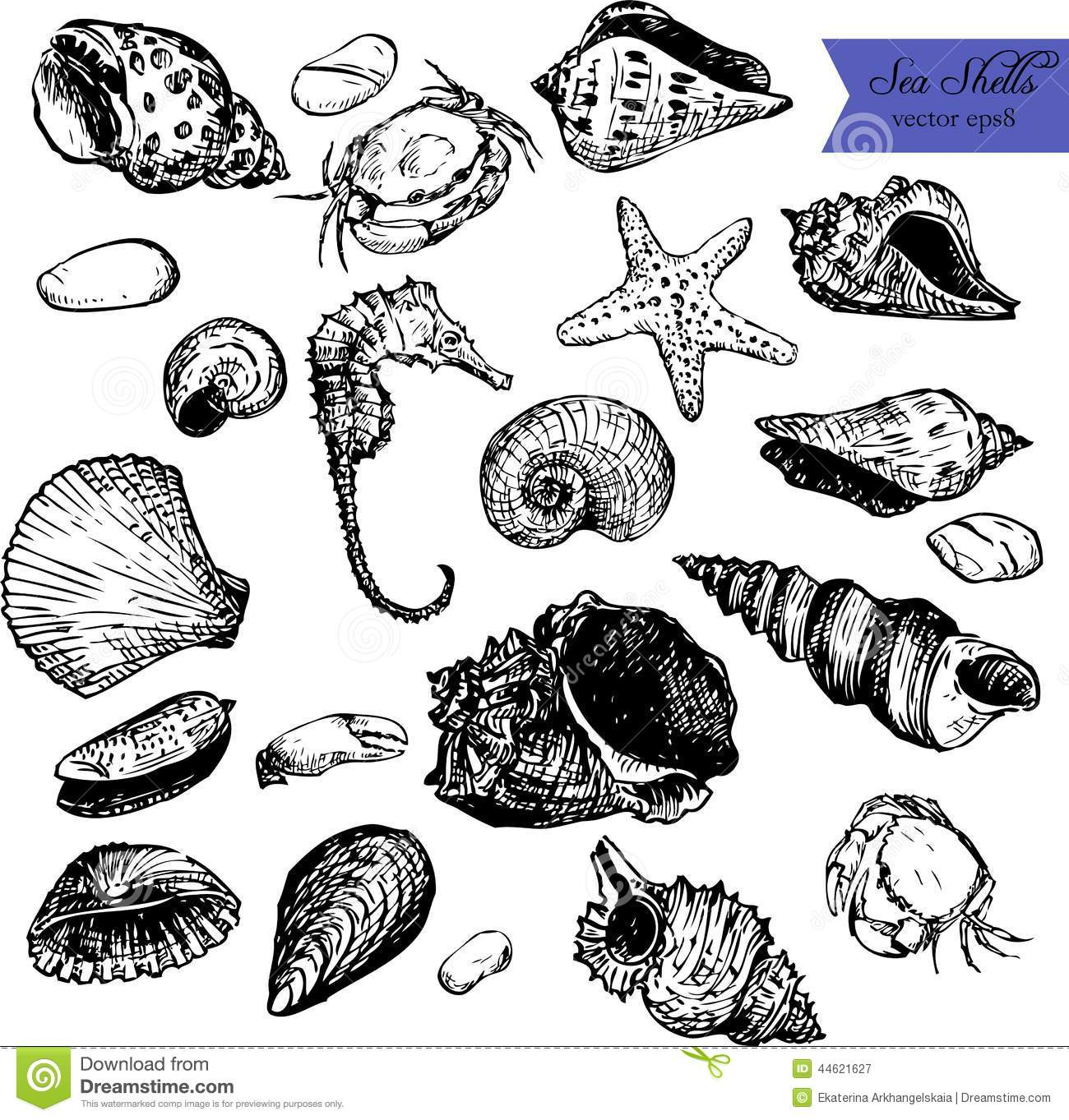 Set Of Line Drawing Shells Stock Vector