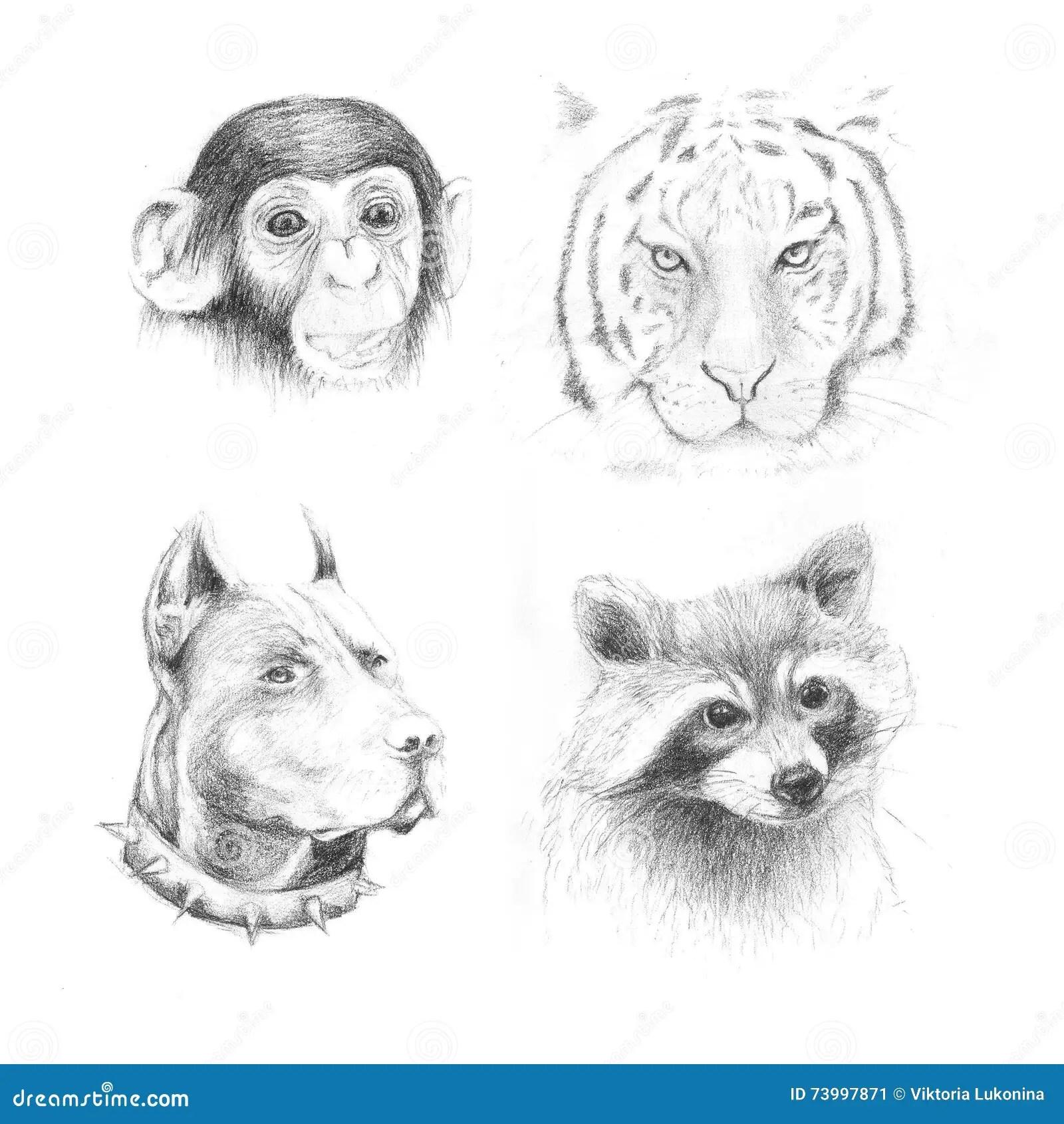 Set Pencil Drawing Animals Stock Illustration