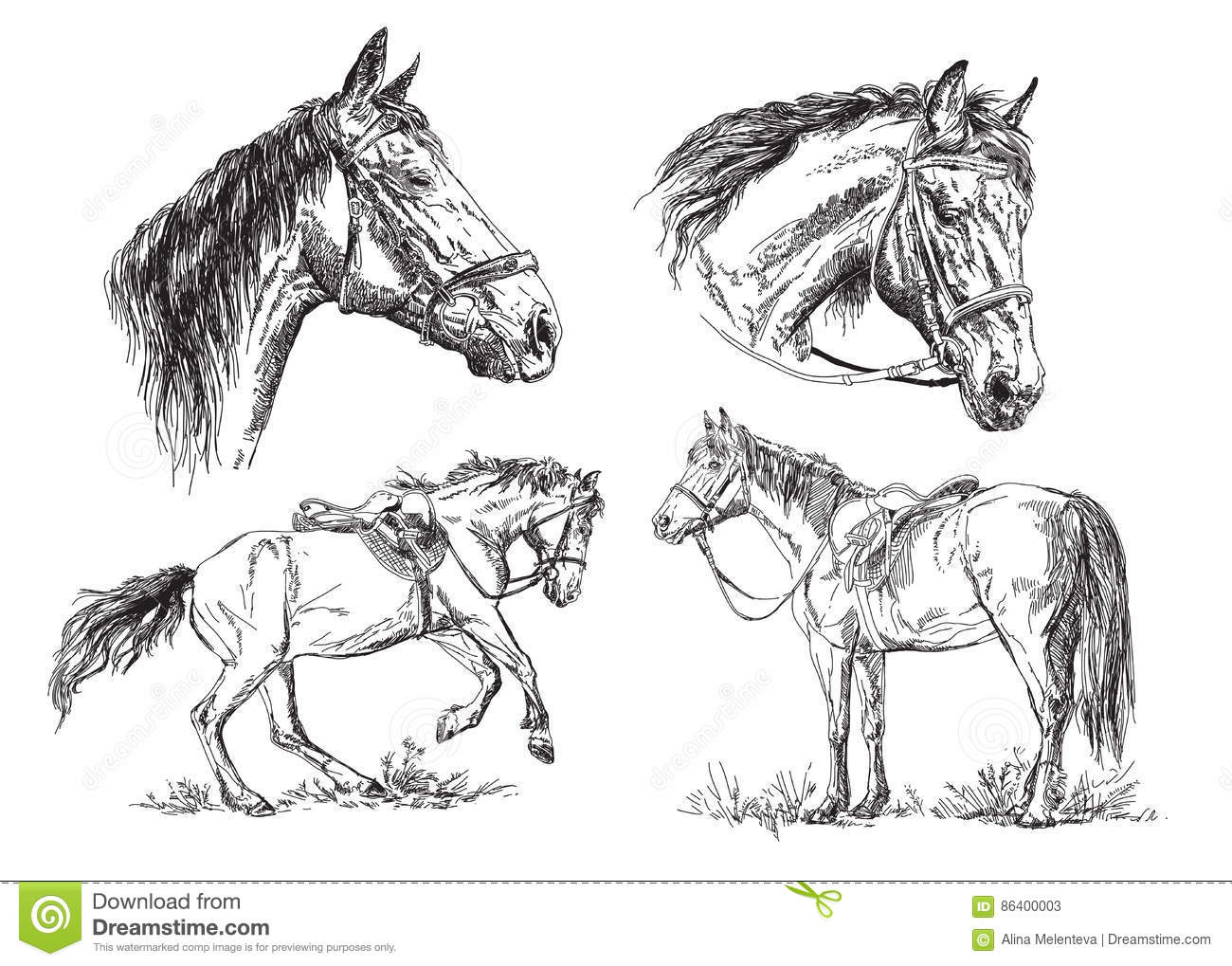 Set Of Vector Hand Drawing Horses In Black And White Stock