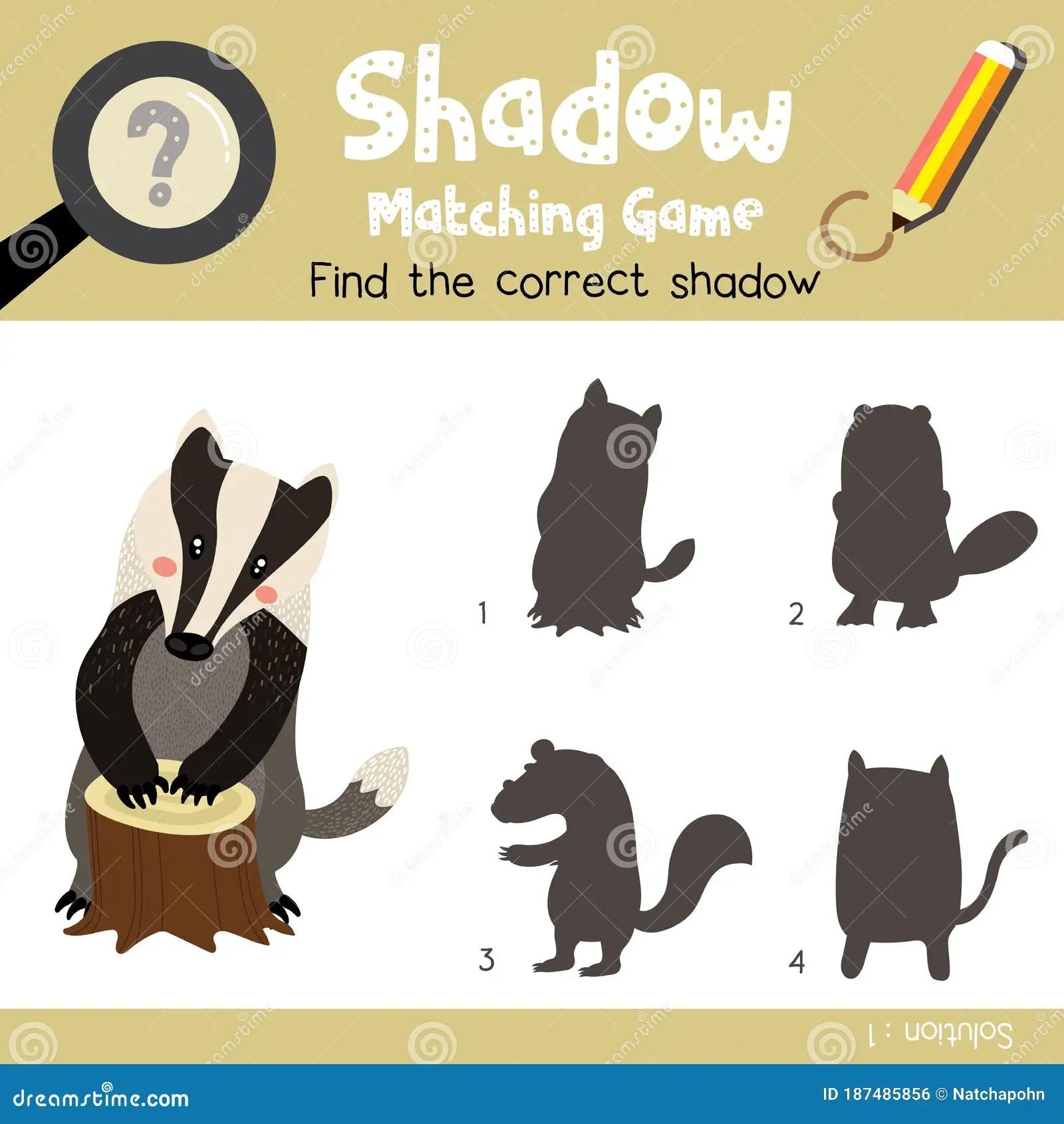 Shadow Matching Game Badger Animal Cartoon Character
