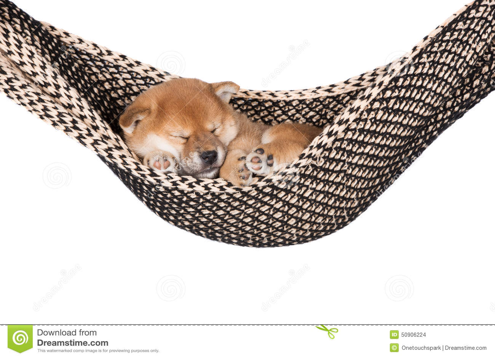 Shiba Inu Puppy Sleeping In A Hammock Stock Photo