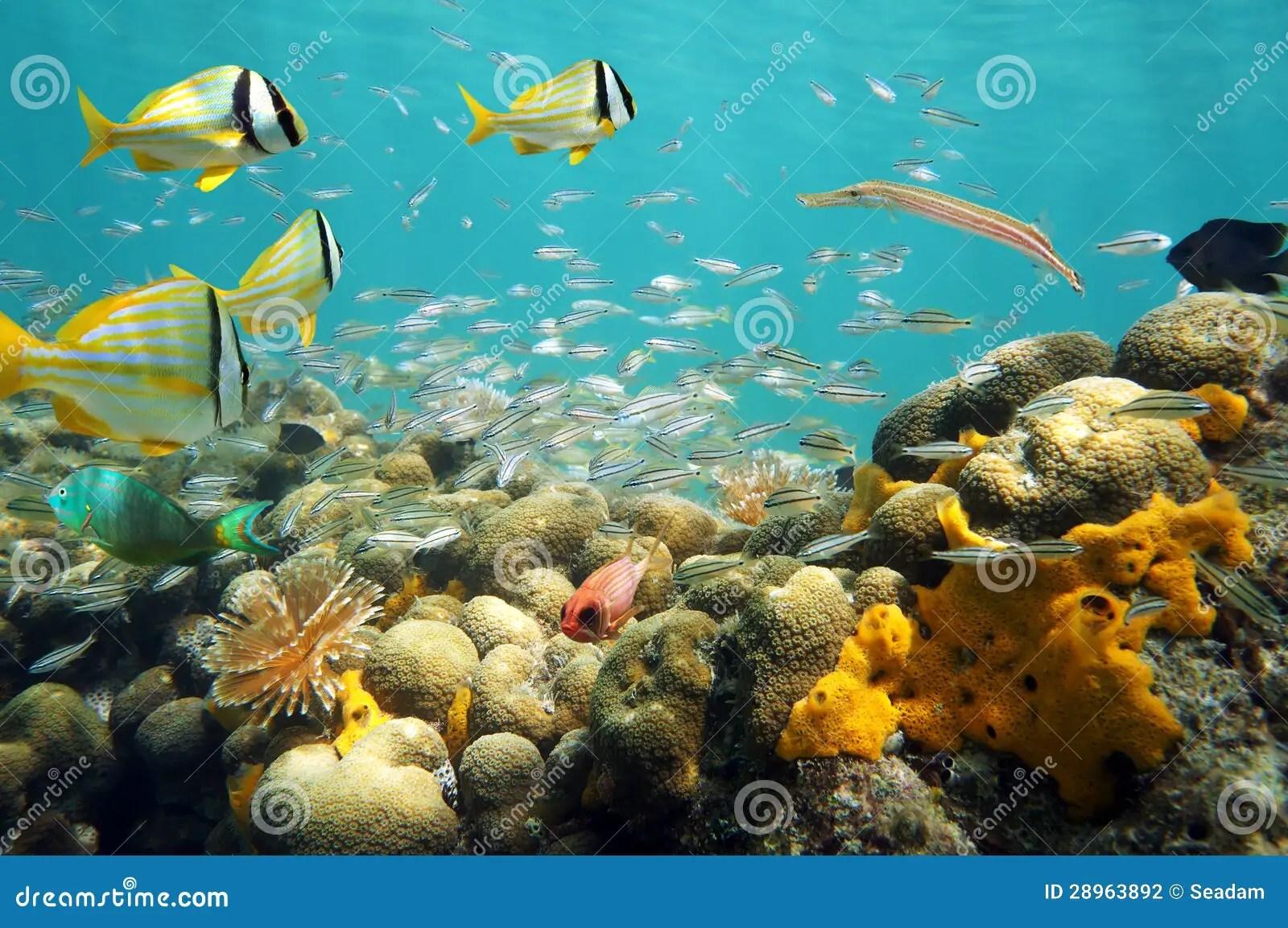 Colorful Caribbean Fish