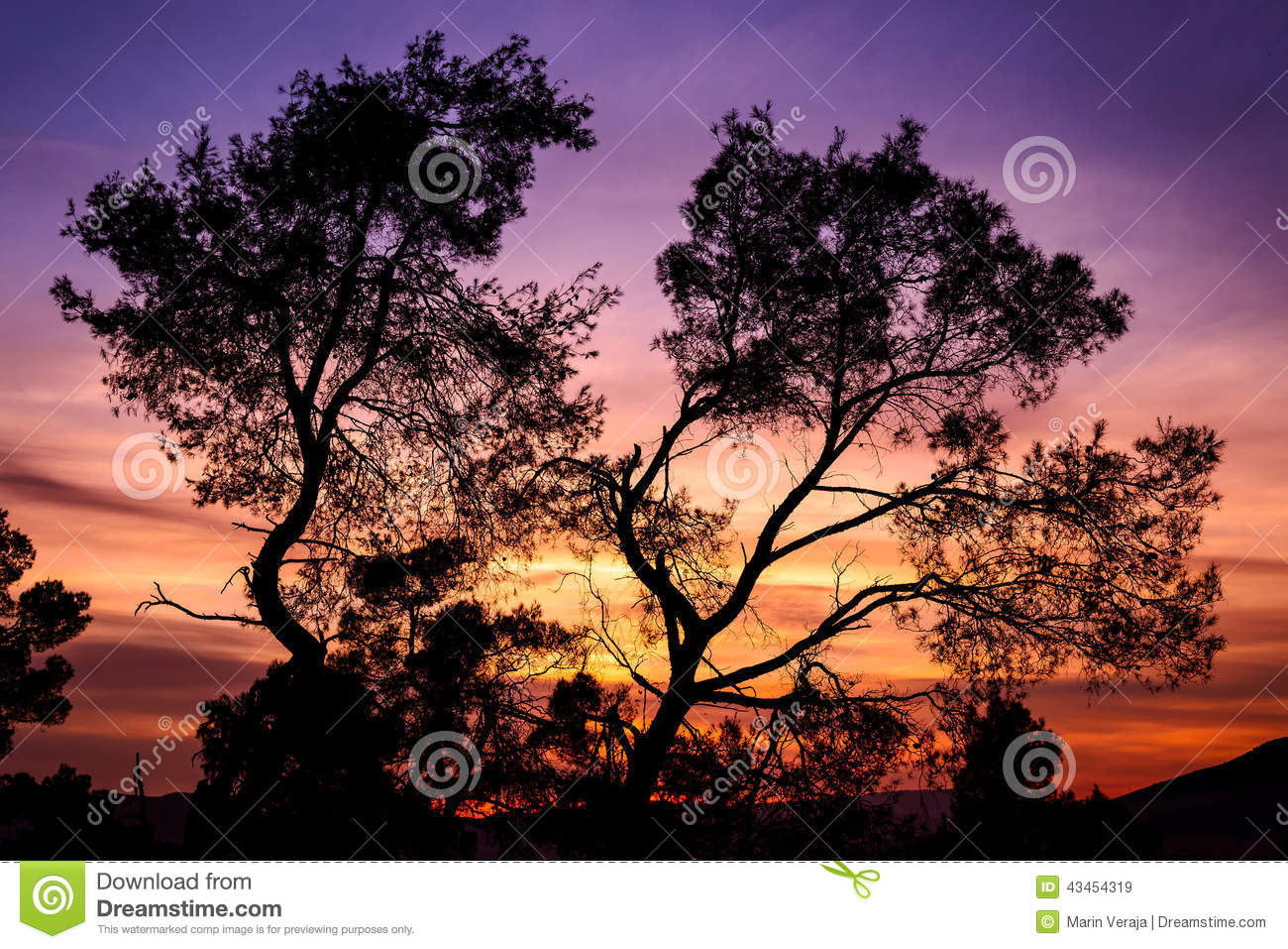 Stock Photo: Silhouette of tree with colorful sky in the backgroun