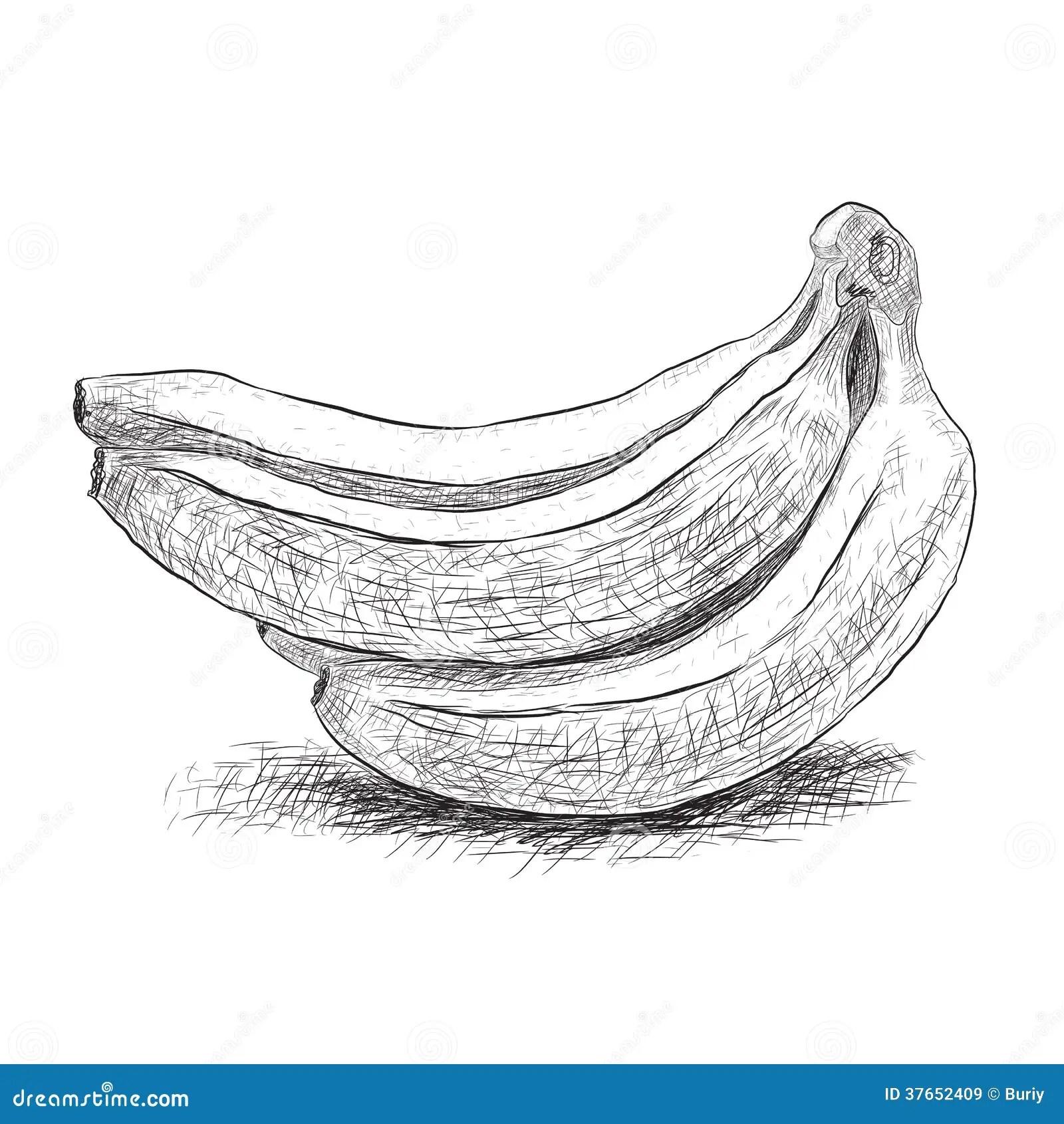 Sketch Banana Stock Vector Illustration Of Taste