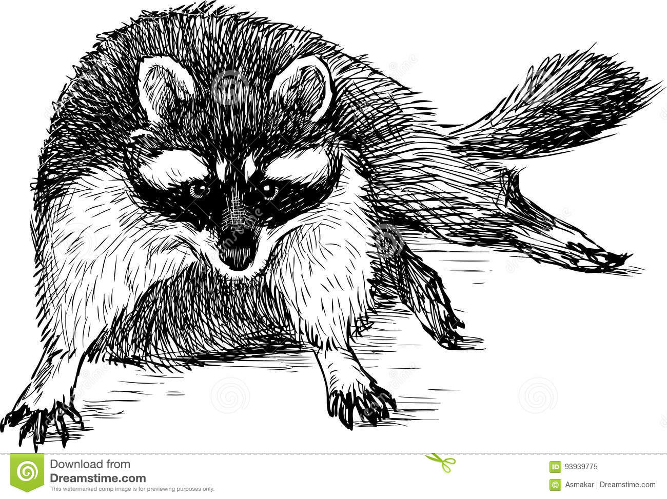 Raccoon Cartoons Illustrations Amp Vector Stock Images