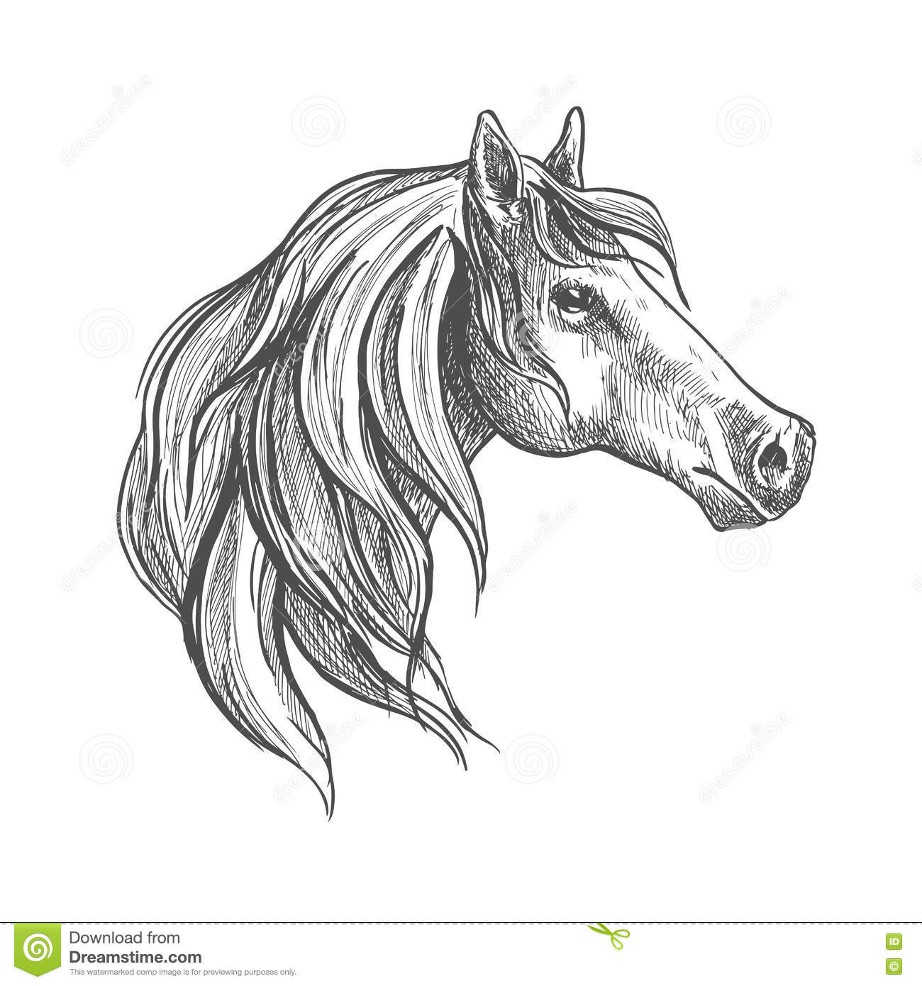 Sketch Of A Horse Head Stock Vector Image Of Emblem