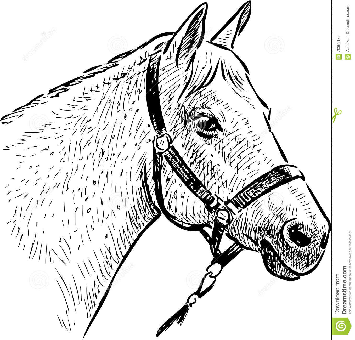 Sketch Of The Horse Head Stock Image Image Of Head