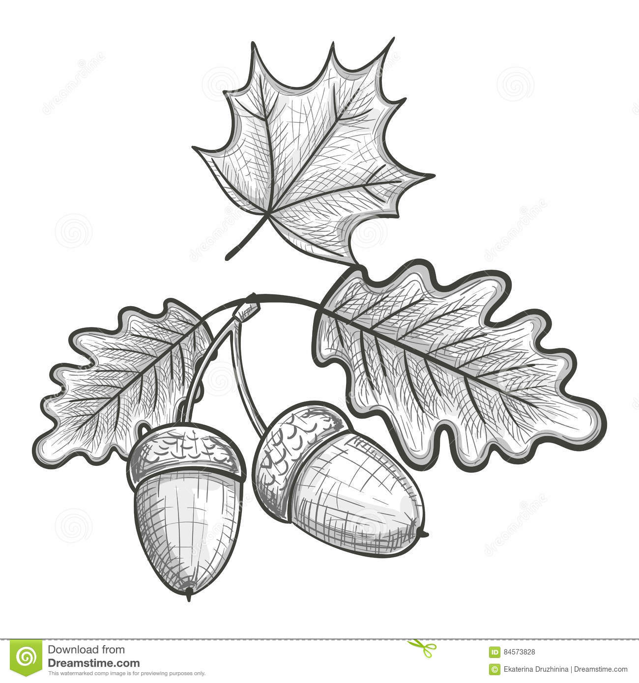 Sketch Of An Oak Leaf And Acorn Stock Vector