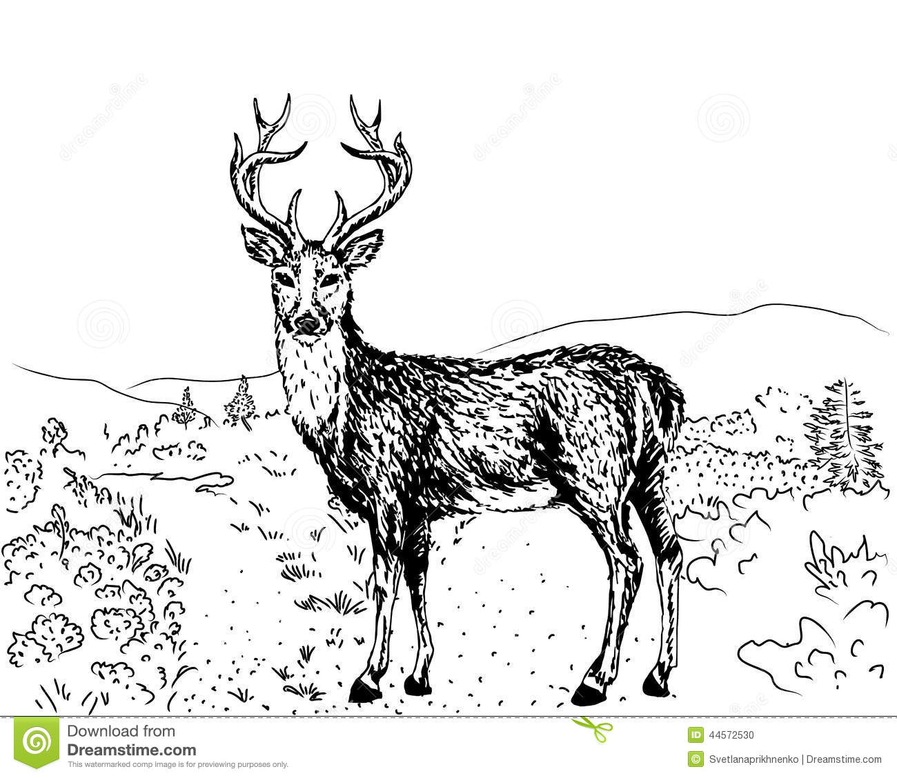 Sketch Of Reindeer Stock Vector