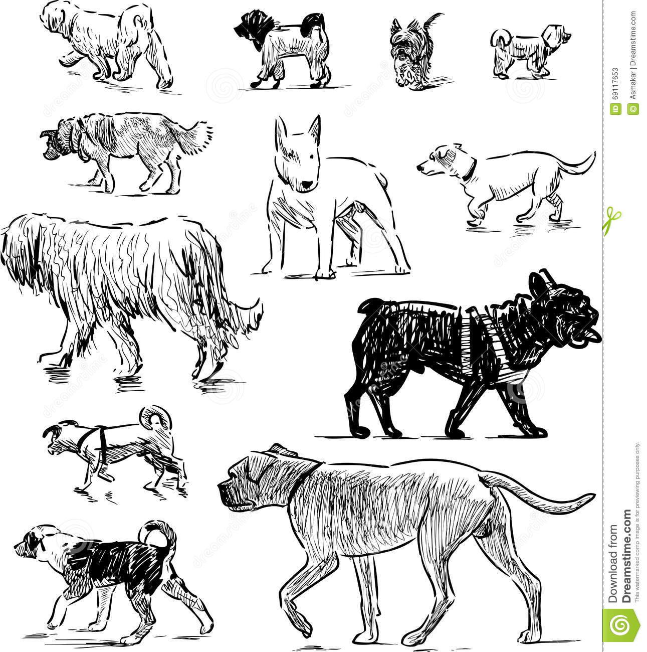 Sketches Of Different Dogs Stock Vector Illustration Of
